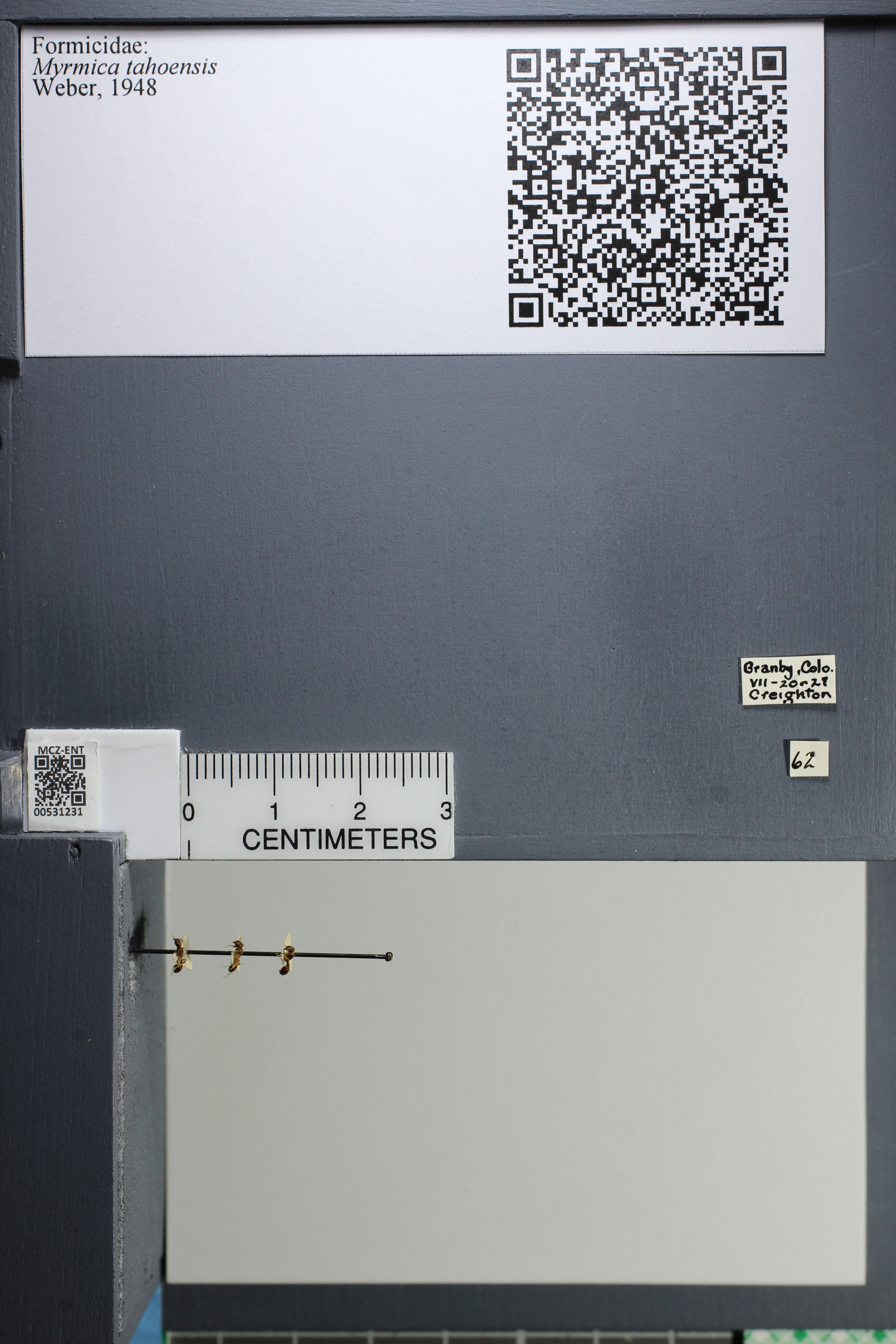 http://mczbase.mcz.harvard.edu/specimen_images/ent-formicidae/datashot/2014_08_08/IMG_303050.JPG