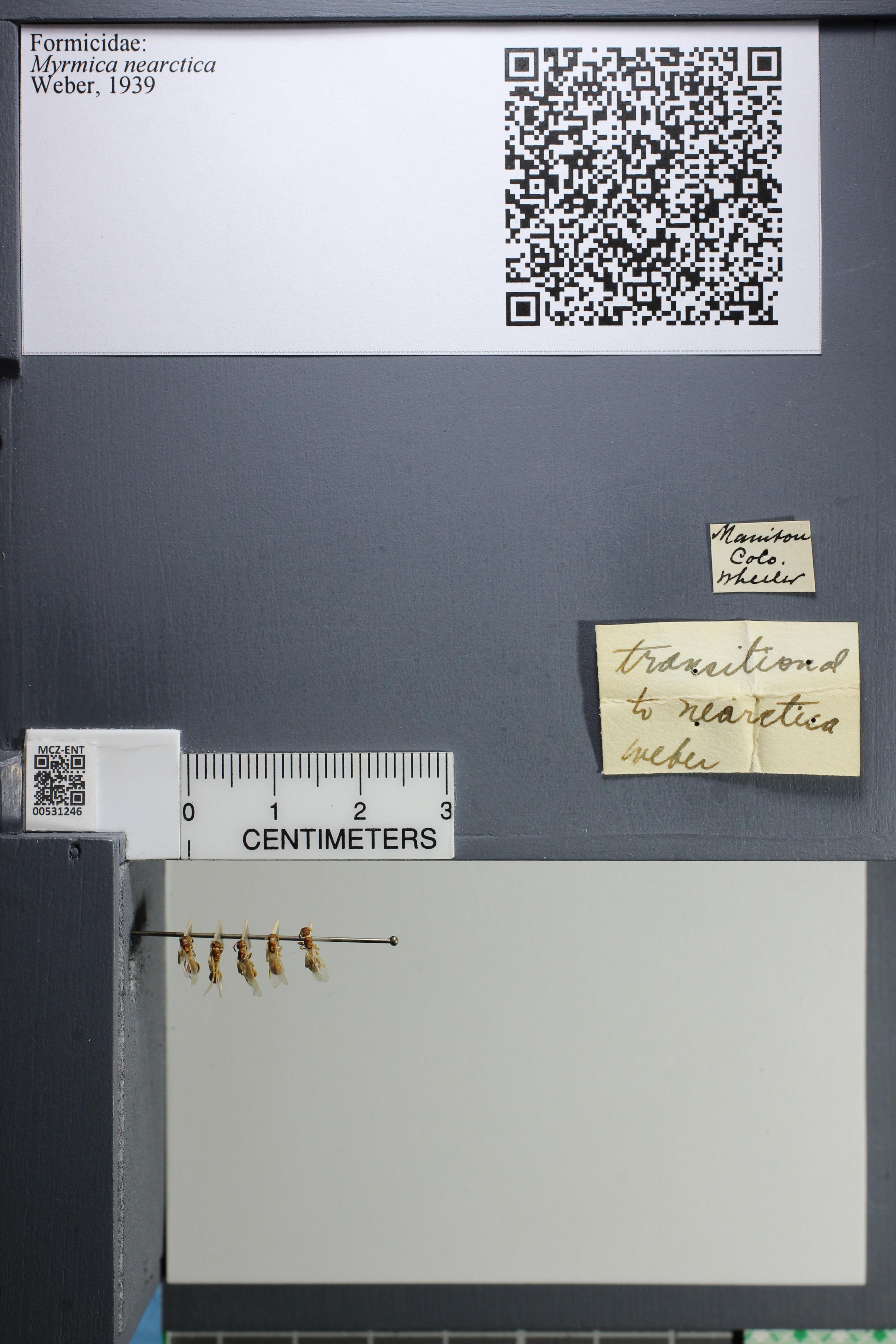 http://mczbase.mcz.harvard.edu/specimen_images/ent-formicidae/datashot/2014_08_08/IMG_303067.JPG