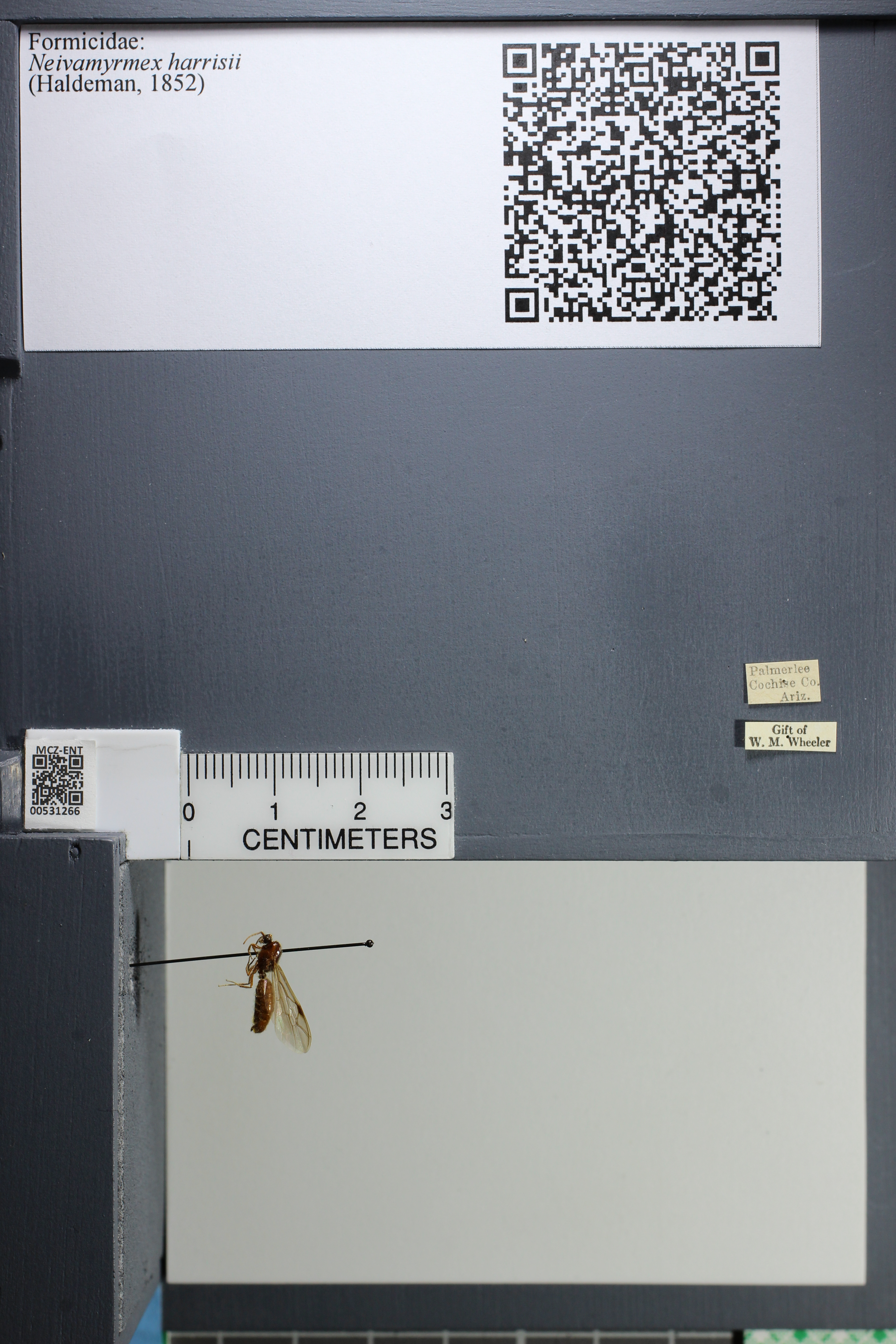 http://mczbase.mcz.harvard.edu/specimen_images/ent-formicidae/datashot/2014_08_08/IMG_303096.JPG
