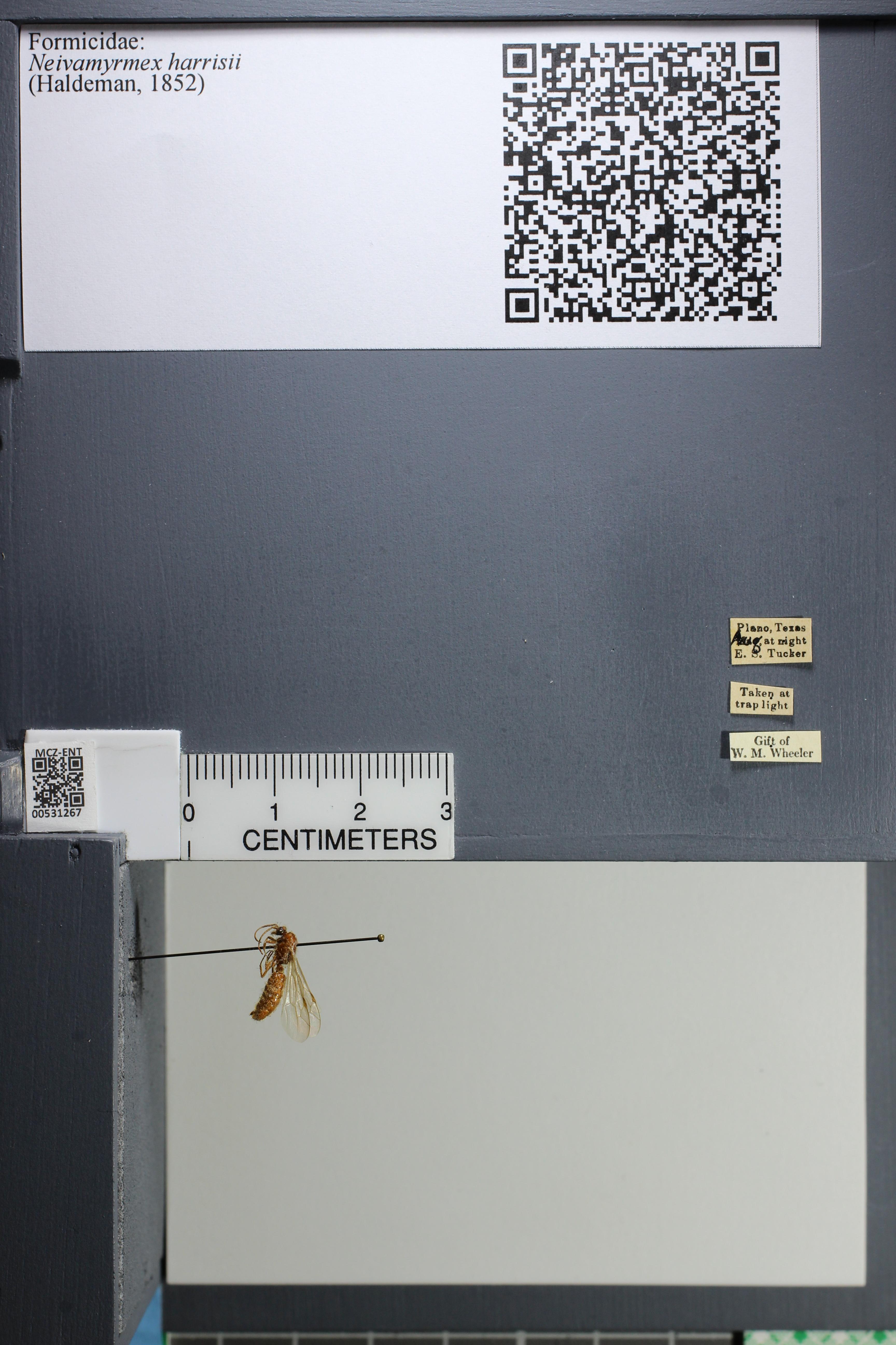 http://mczbase.mcz.harvard.edu/specimen_images/ent-formicidae/datashot/2014_08_08/IMG_303097.JPG