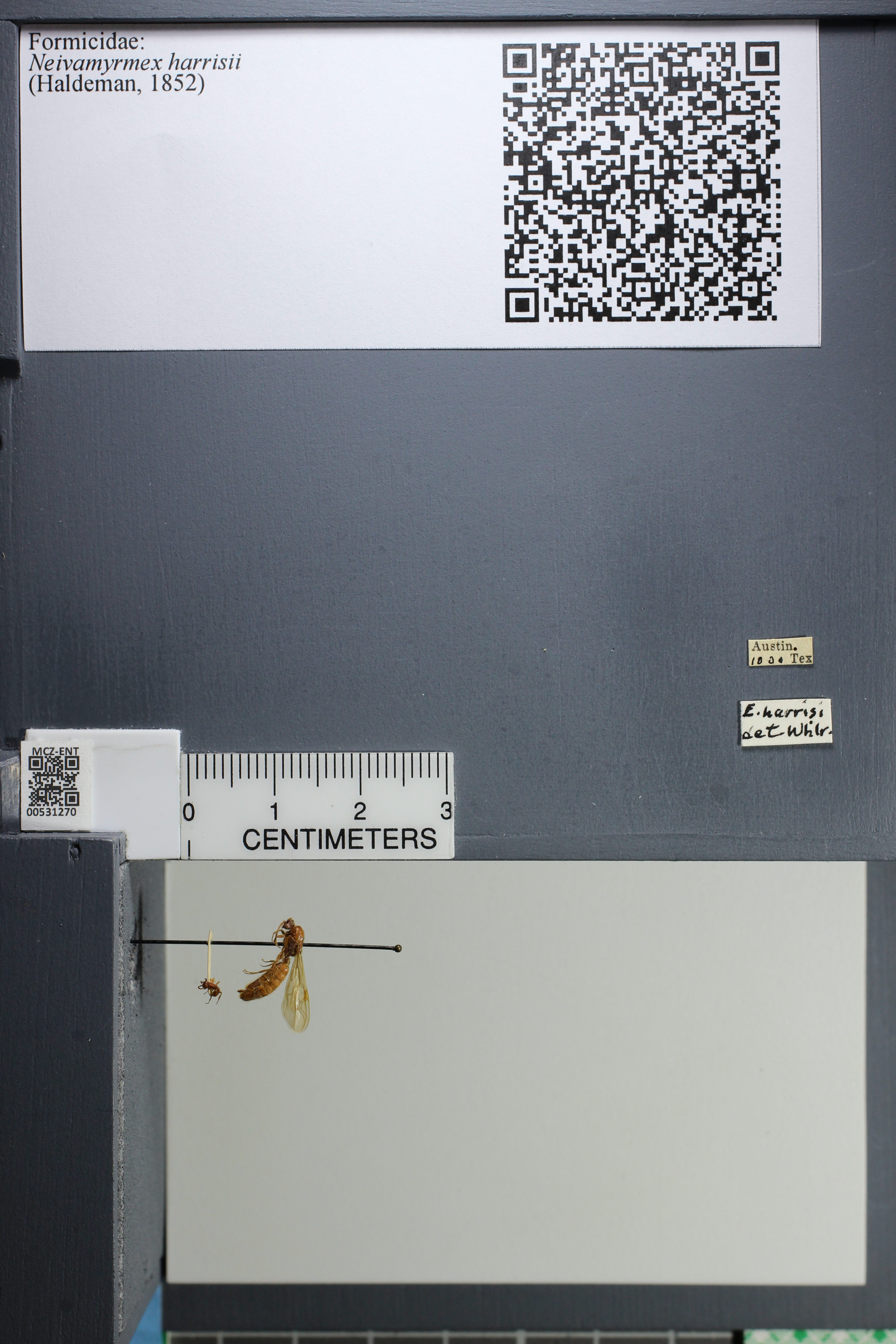 http://mczbase.mcz.harvard.edu/specimen_images/ent-formicidae/datashot/2014_08_08/IMG_303100.JPG
