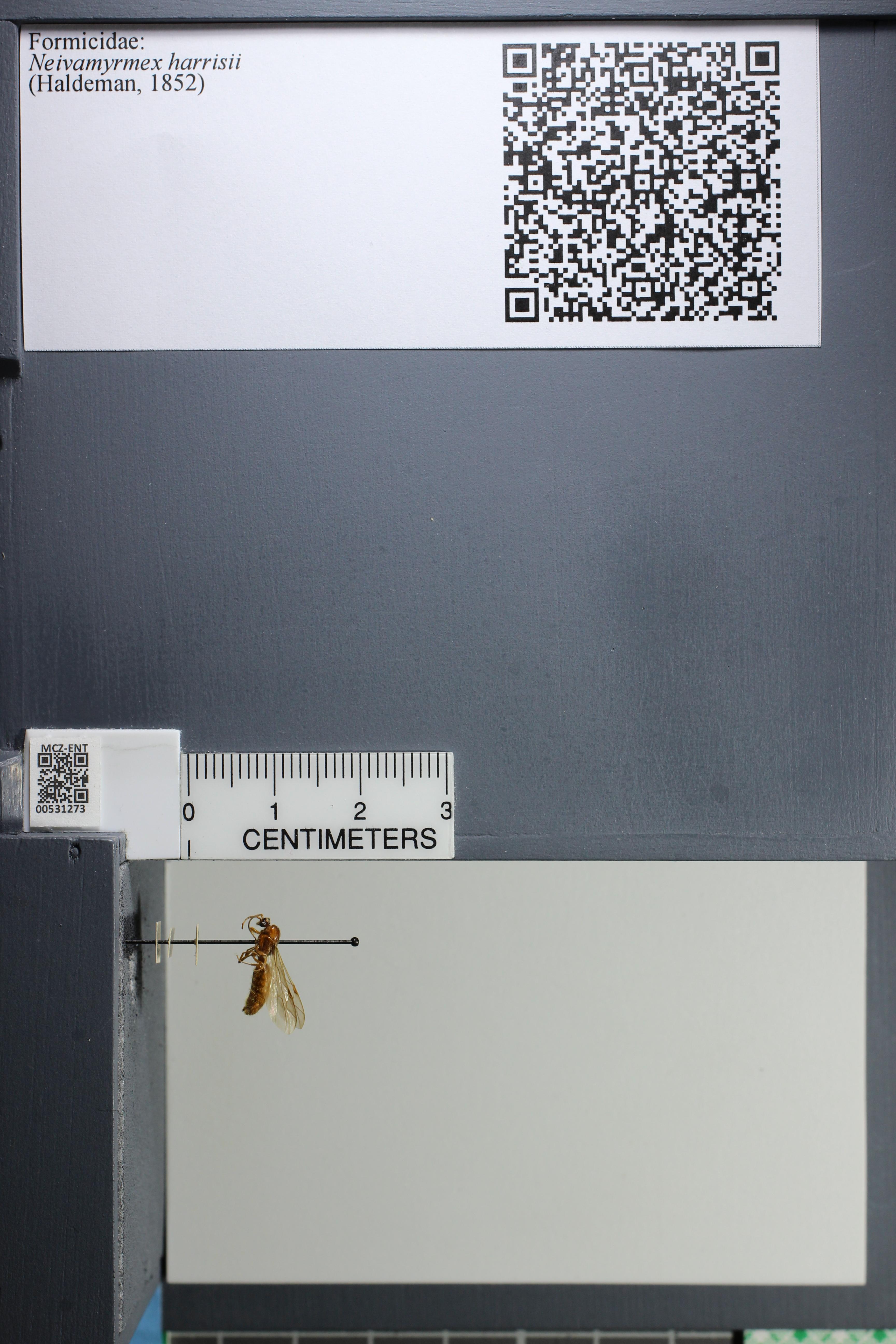 http://mczbase.mcz.harvard.edu/specimen_images/ent-formicidae/datashot/2014_08_08/IMG_303103.JPG