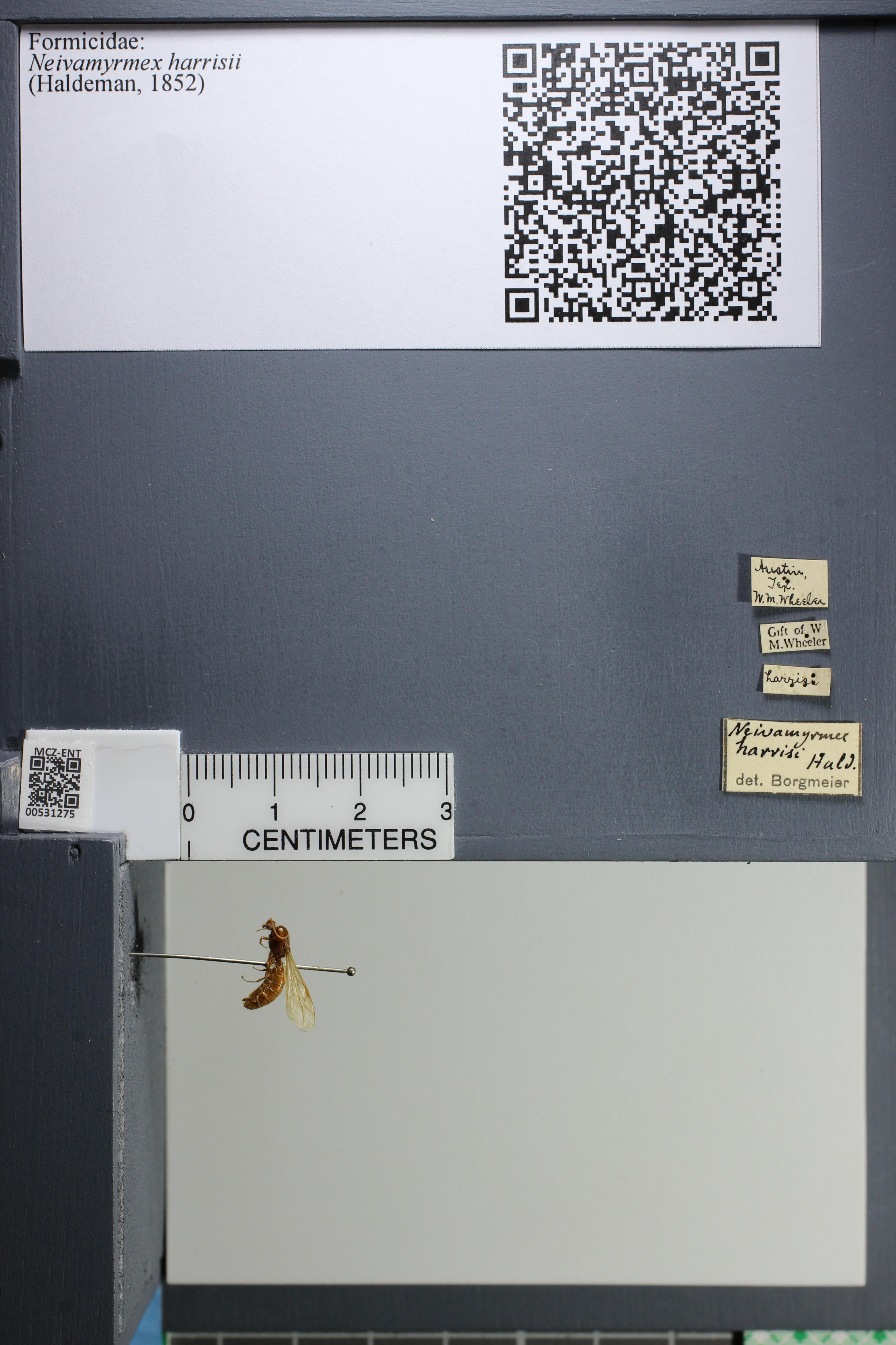 http://mczbase.mcz.harvard.edu/specimen_images/ent-formicidae/datashot/2014_08_08/IMG_303105.JPG
