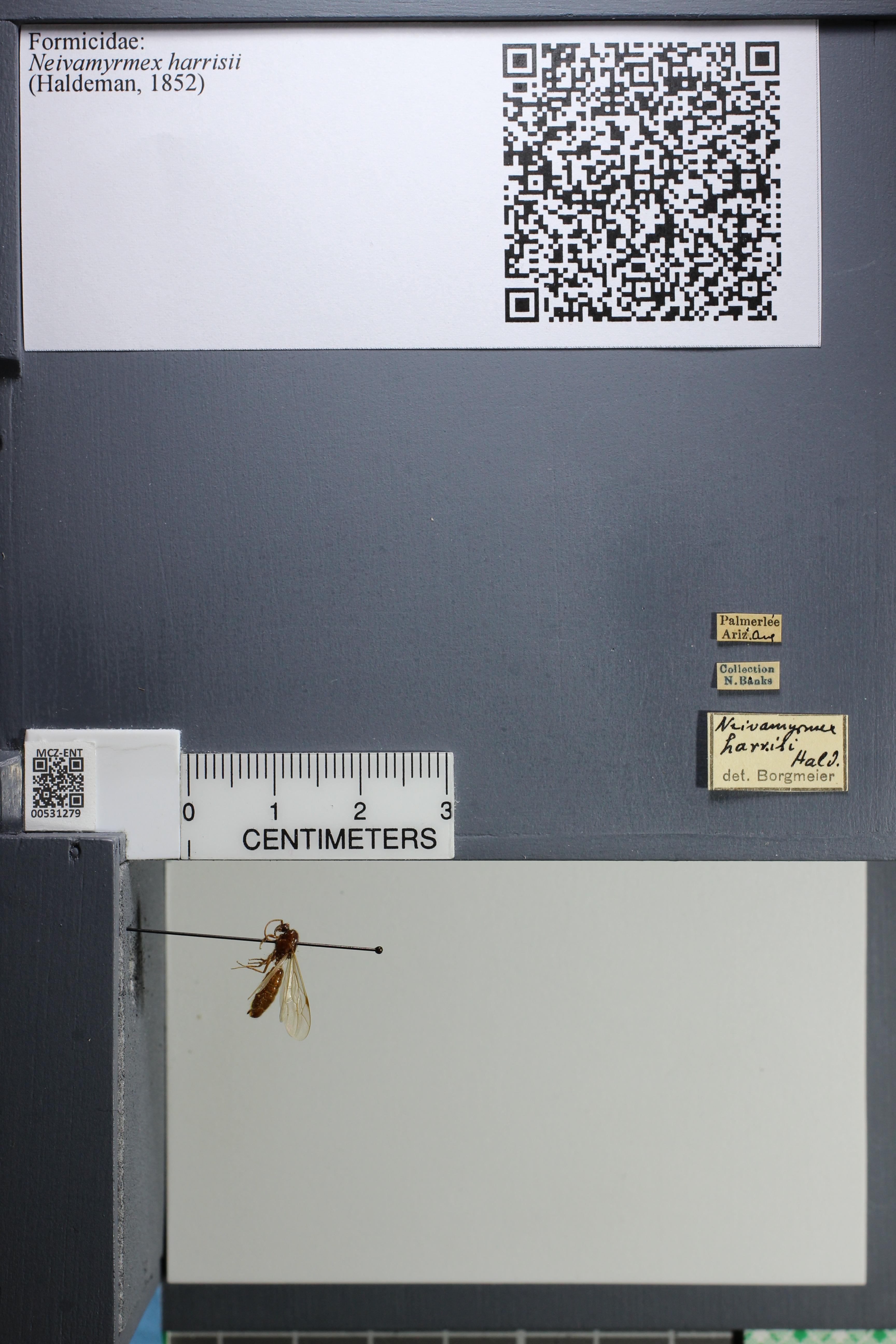 http://mczbase.mcz.harvard.edu/specimen_images/ent-formicidae/datashot/2014_08_08/IMG_303109.JPG