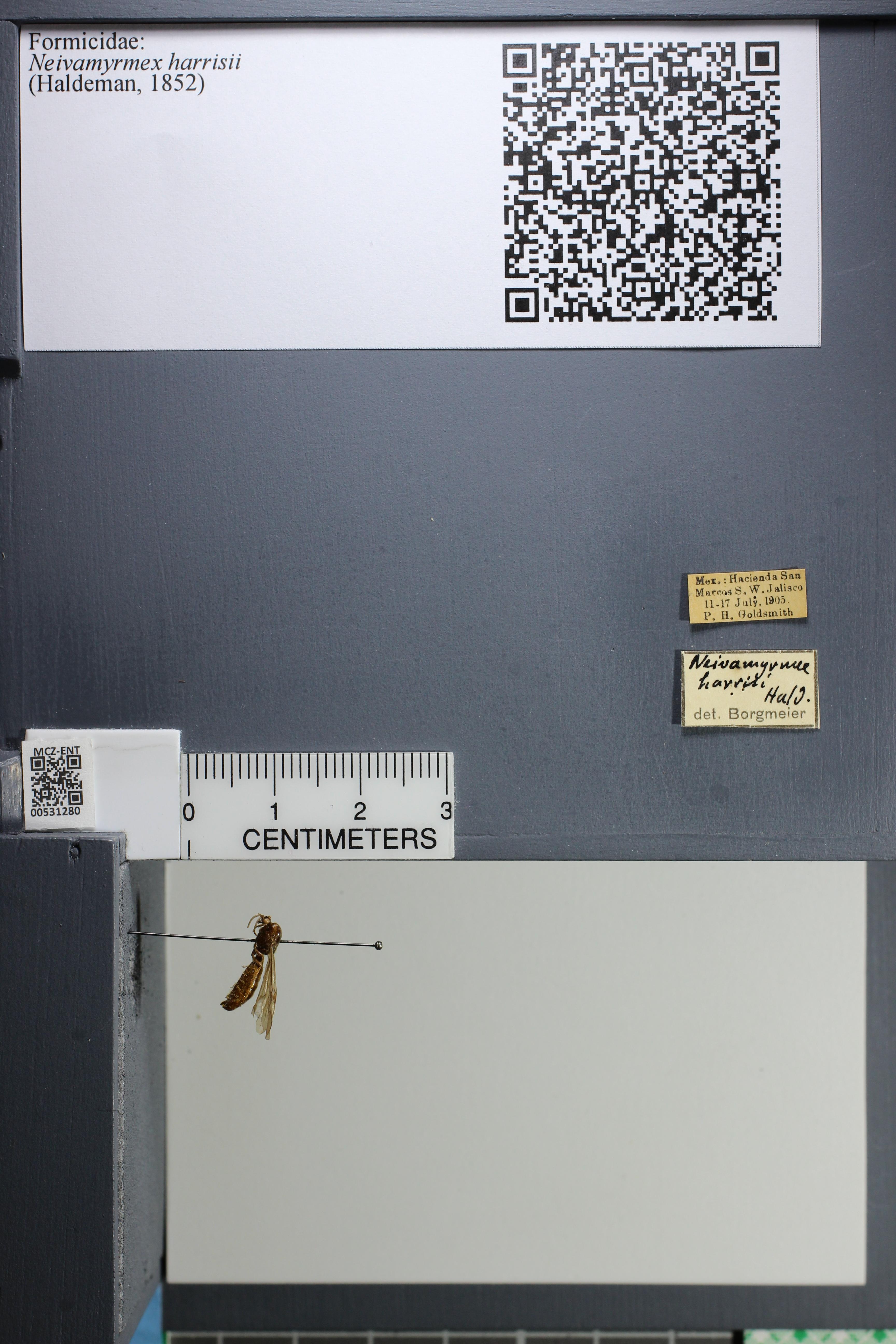 http://mczbase.mcz.harvard.edu/specimen_images/ent-formicidae/datashot/2014_08_08/IMG_303110.JPG
