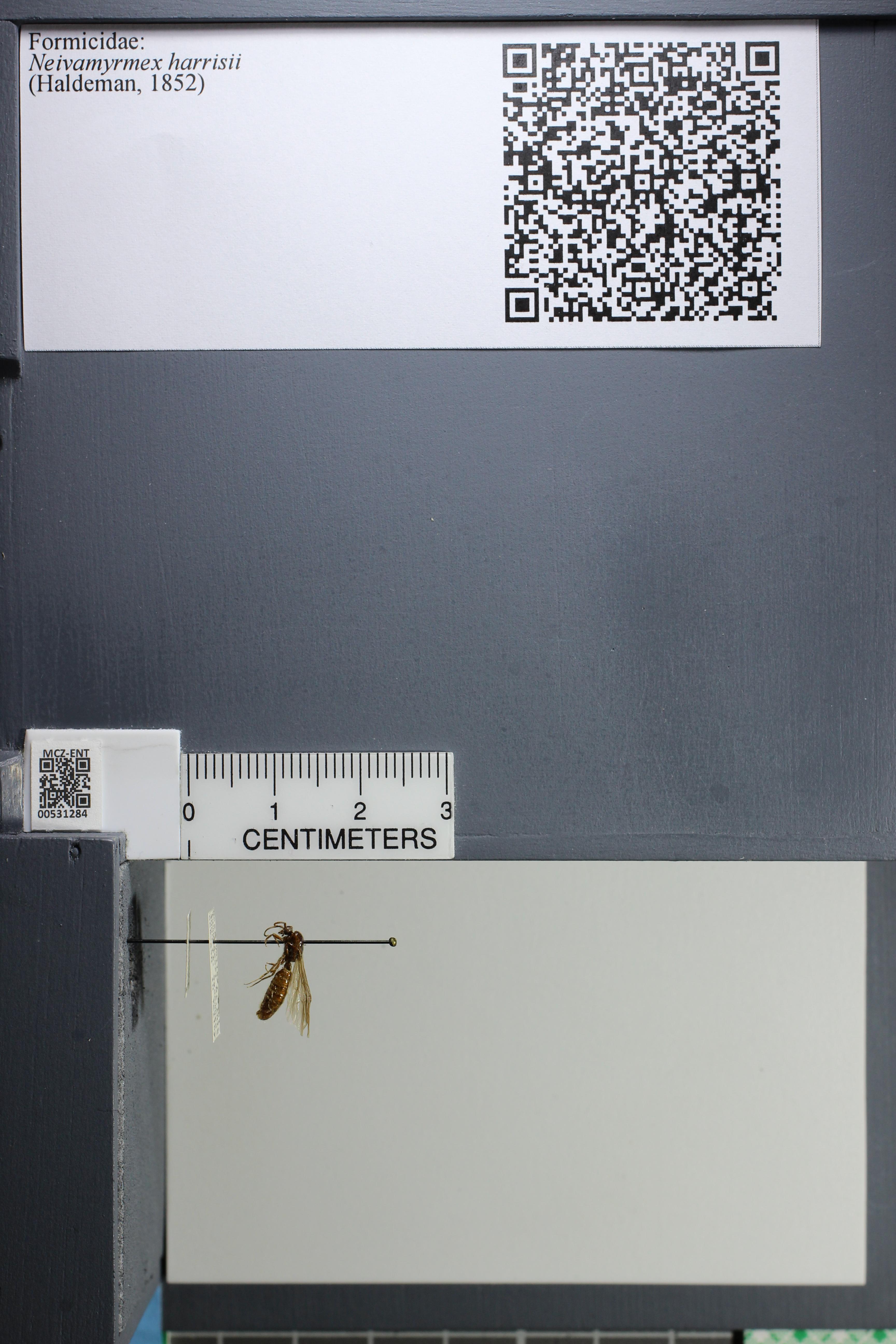 http://mczbase.mcz.harvard.edu/specimen_images/ent-formicidae/datashot/2014_08_08/IMG_303114.JPG