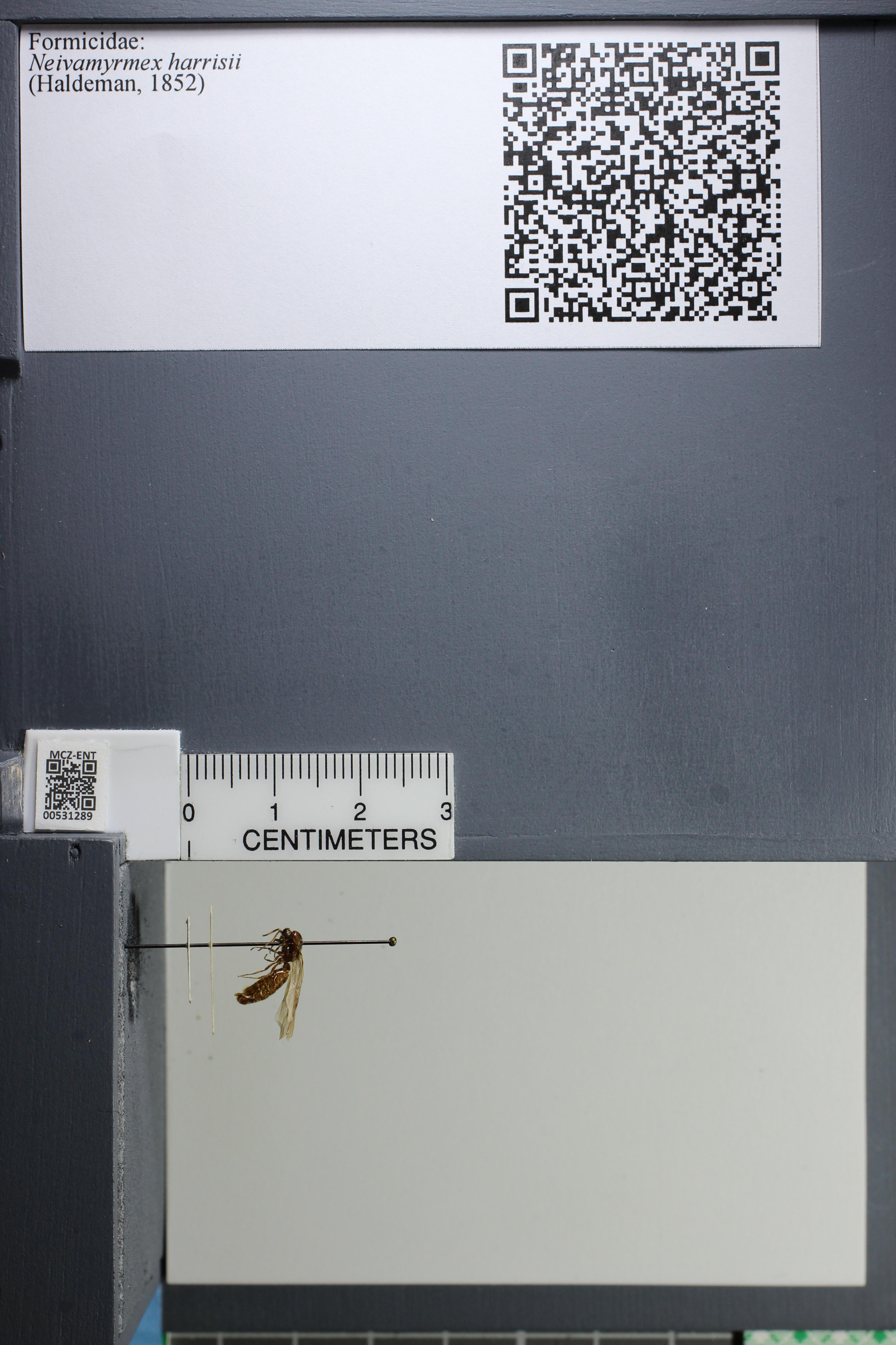 http://mczbase.mcz.harvard.edu/specimen_images/ent-formicidae/datashot/2014_08_08/IMG_303119.JPG