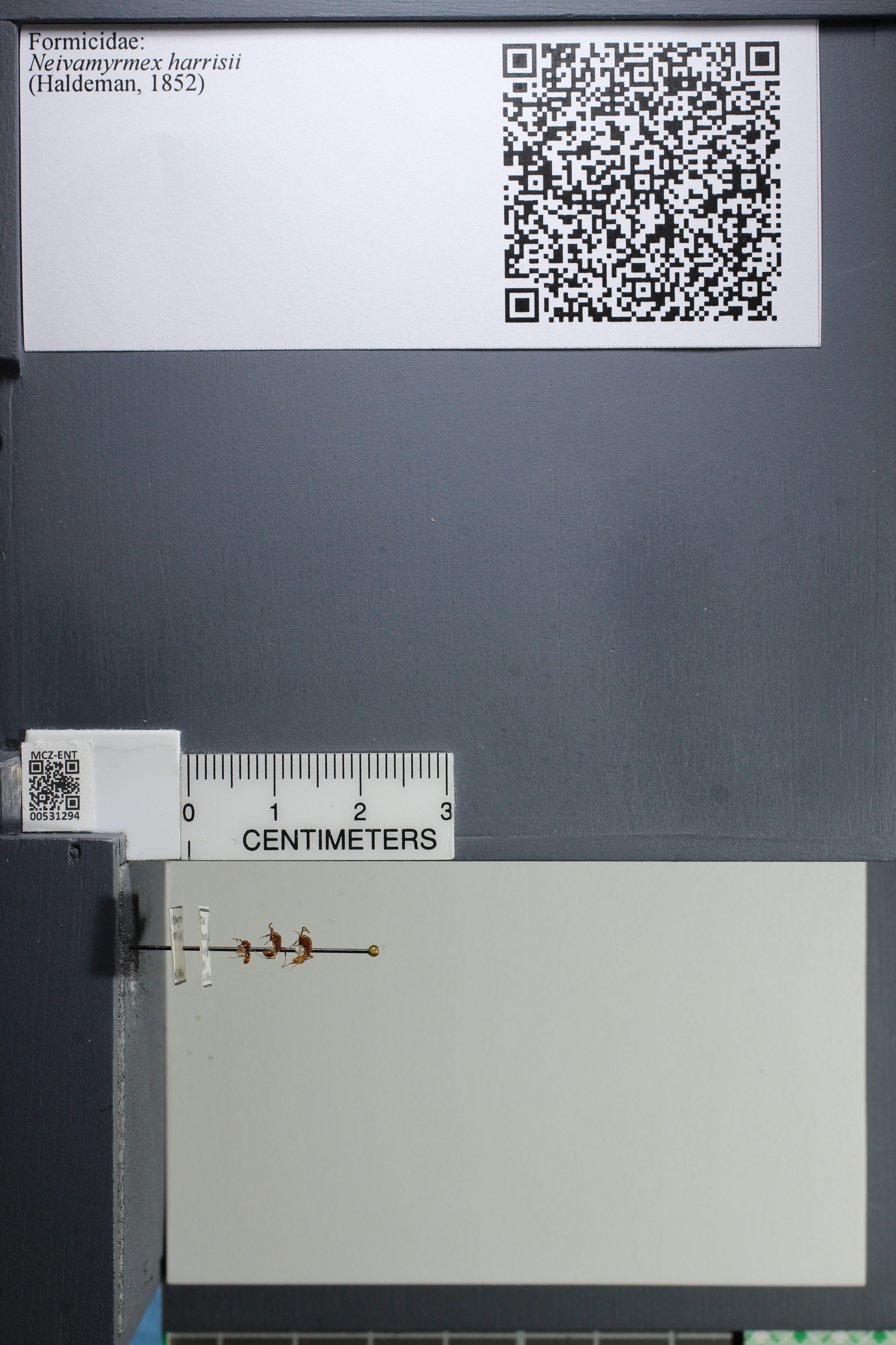 http://mczbase.mcz.harvard.edu/specimen_images/ent-formicidae/datashot/2014_08_08/IMG_303124.JPG