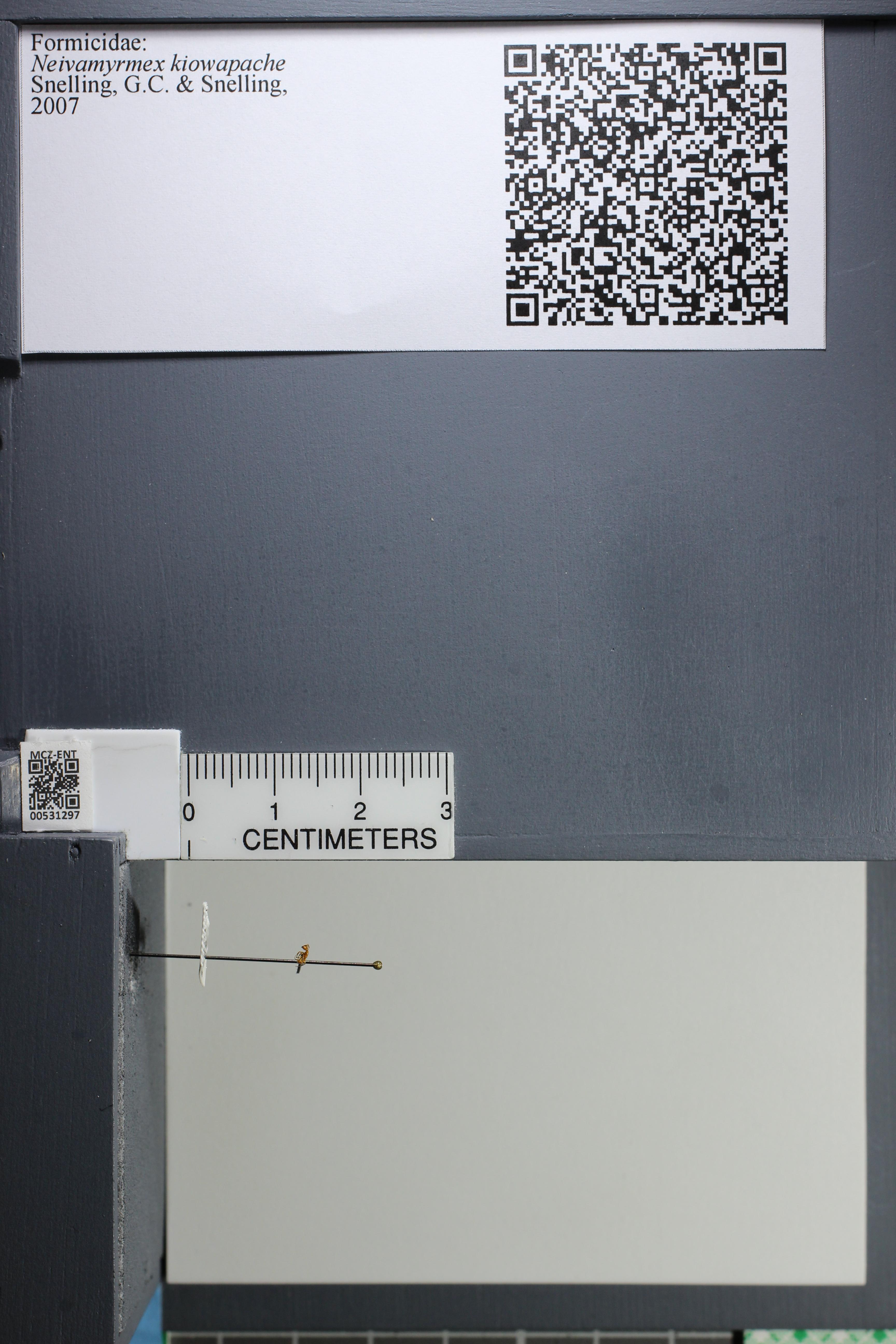 http://mczbase.mcz.harvard.edu/specimen_images/ent-formicidae/datashot/2014_08_08/IMG_303132.JPG
