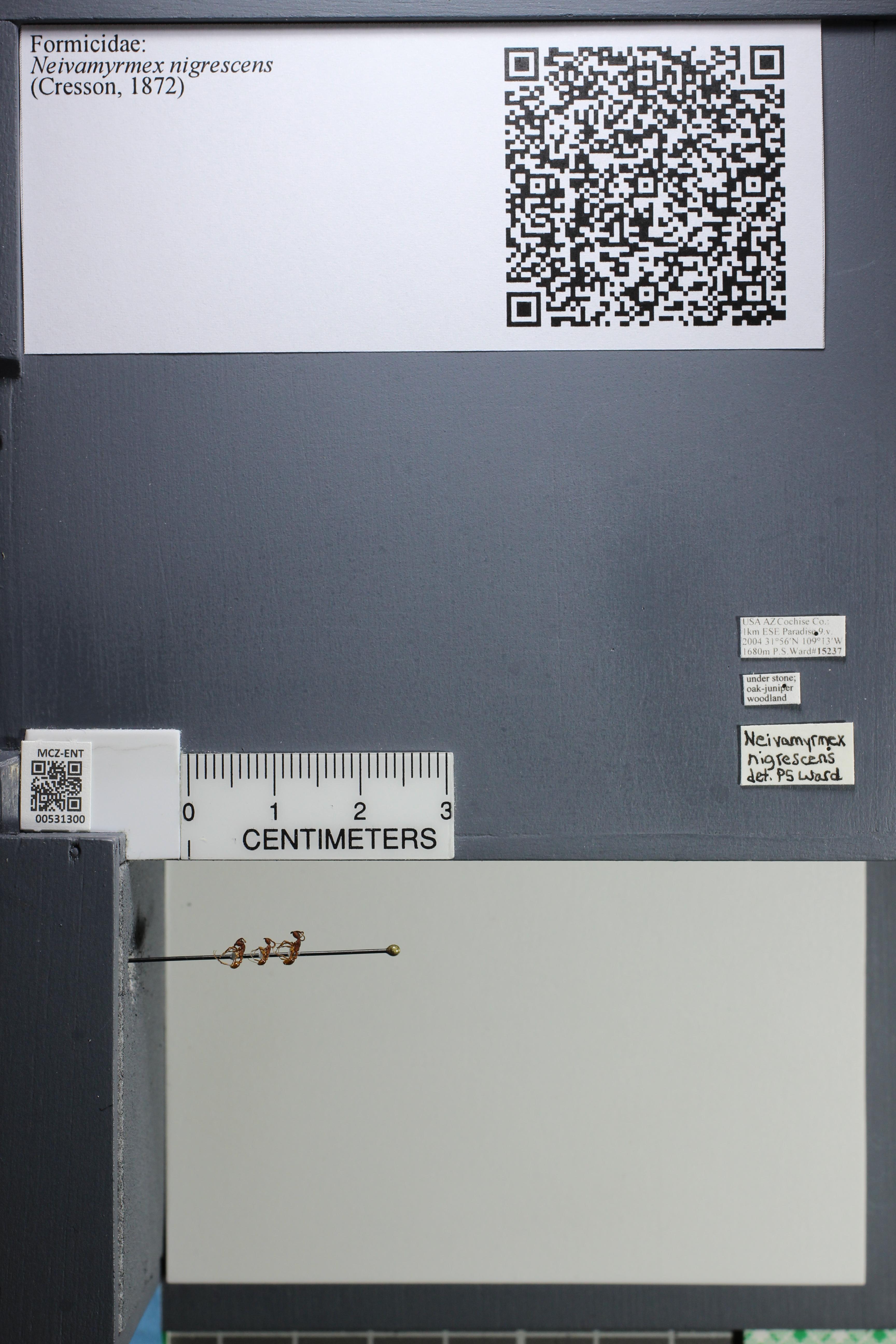 http://mczbase.mcz.harvard.edu/specimen_images/ent-formicidae/datashot/2014_08_08/IMG_303135.JPG