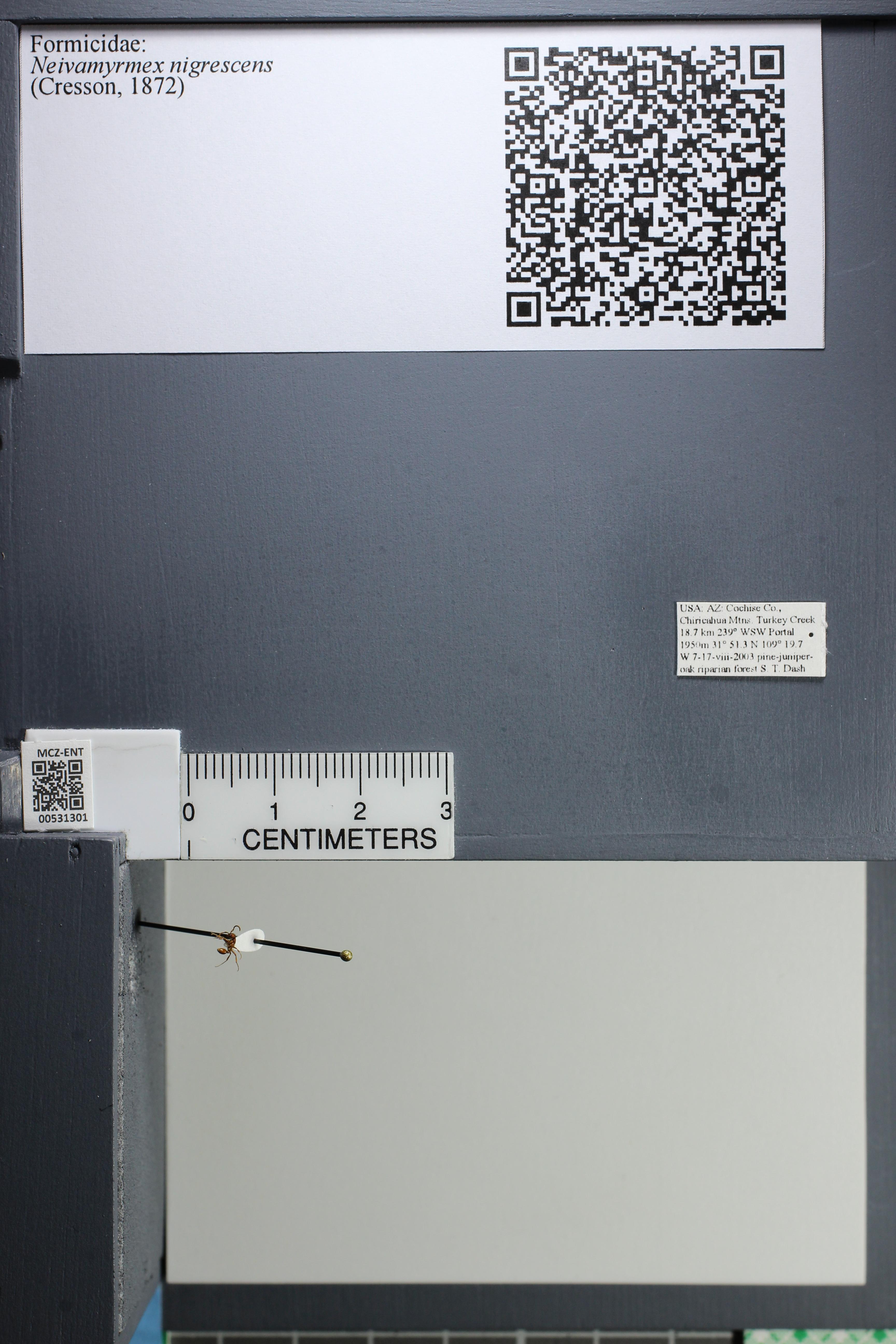 http://mczbase.mcz.harvard.edu/specimen_images/ent-formicidae/datashot/2014_08_08/IMG_303136.JPG