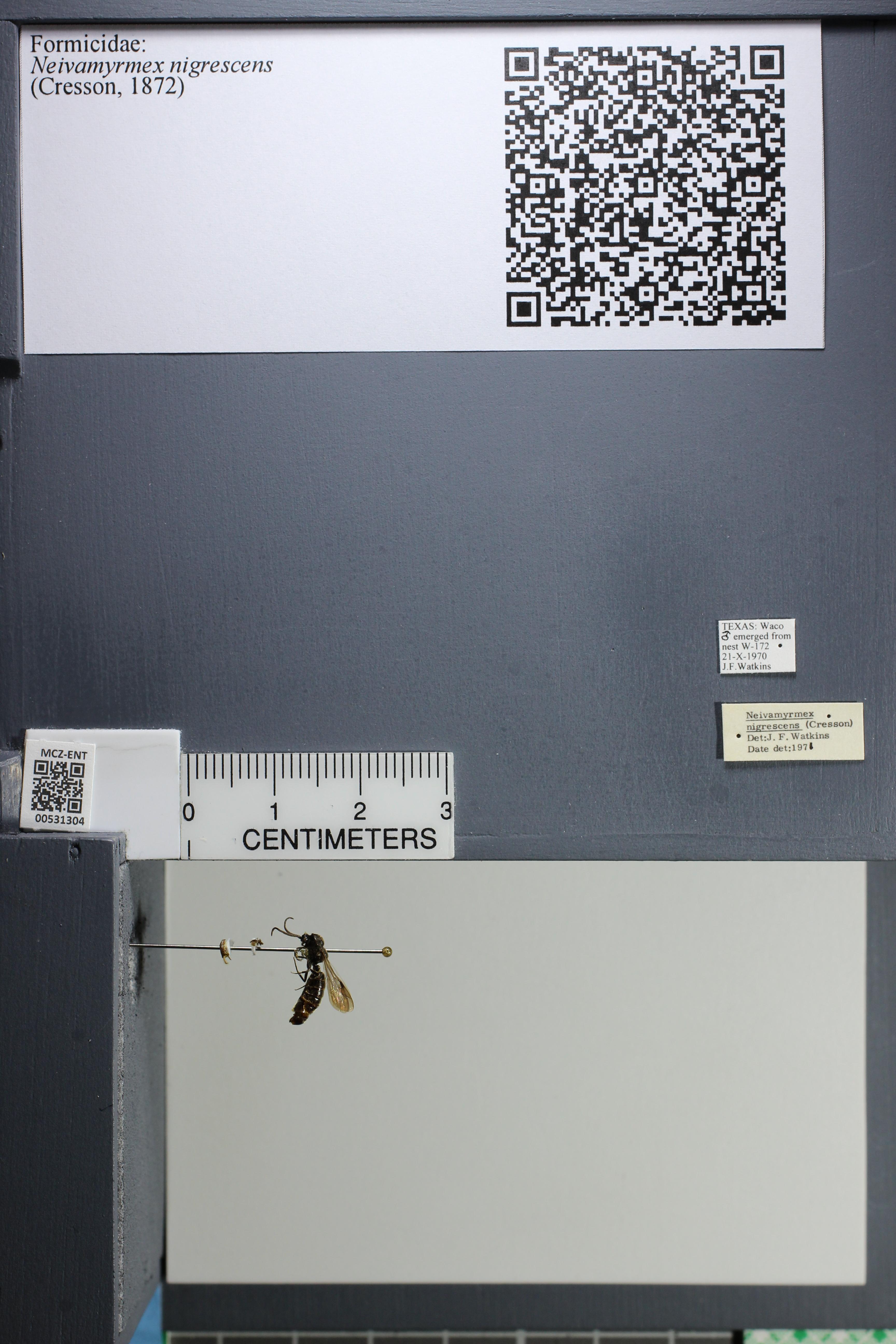 http://mczbase.mcz.harvard.edu/specimen_images/ent-formicidae/datashot/2014_08_08/IMG_303139.JPG