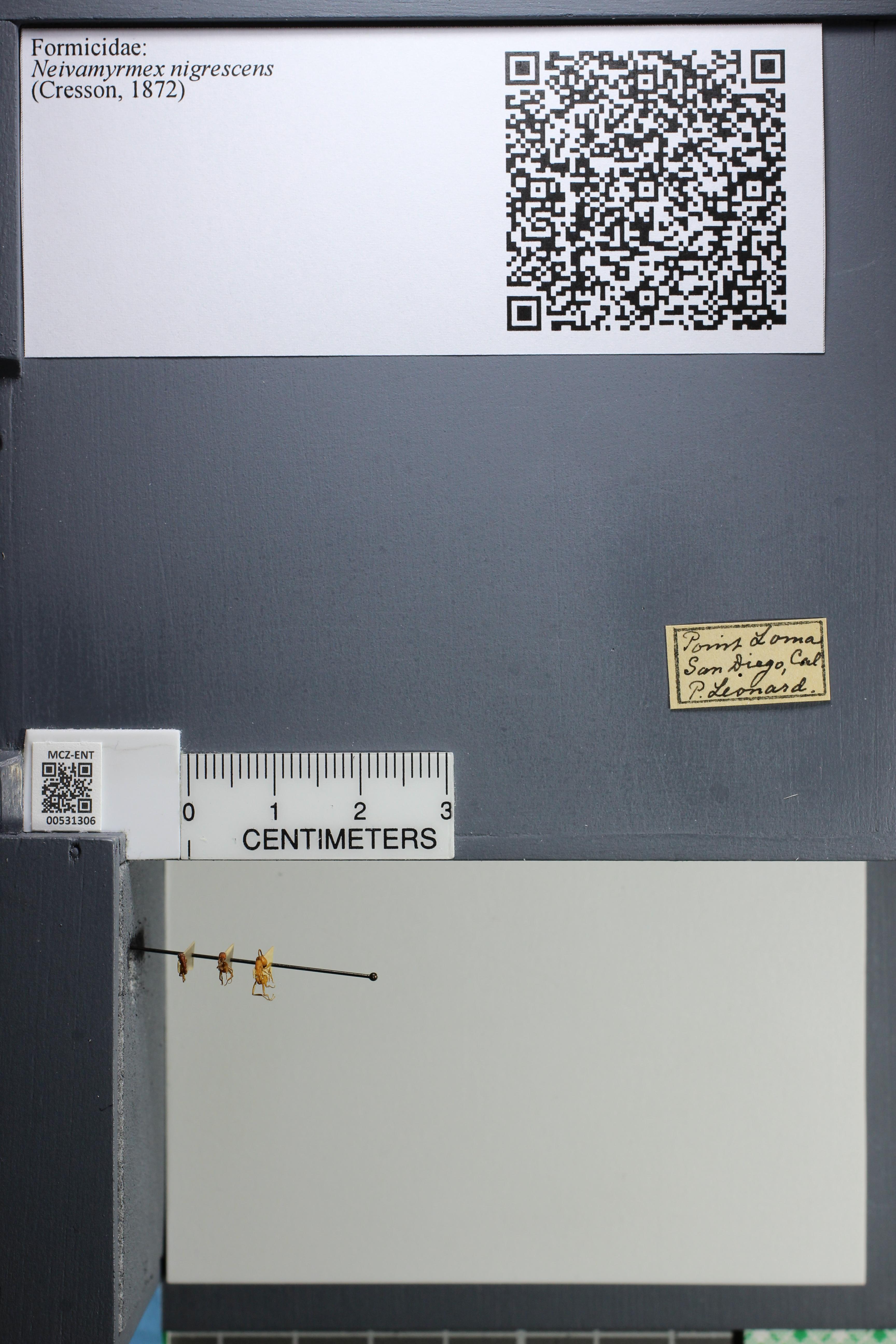 http://mczbase.mcz.harvard.edu/specimen_images/ent-formicidae/datashot/2014_08_08/IMG_303141.JPG