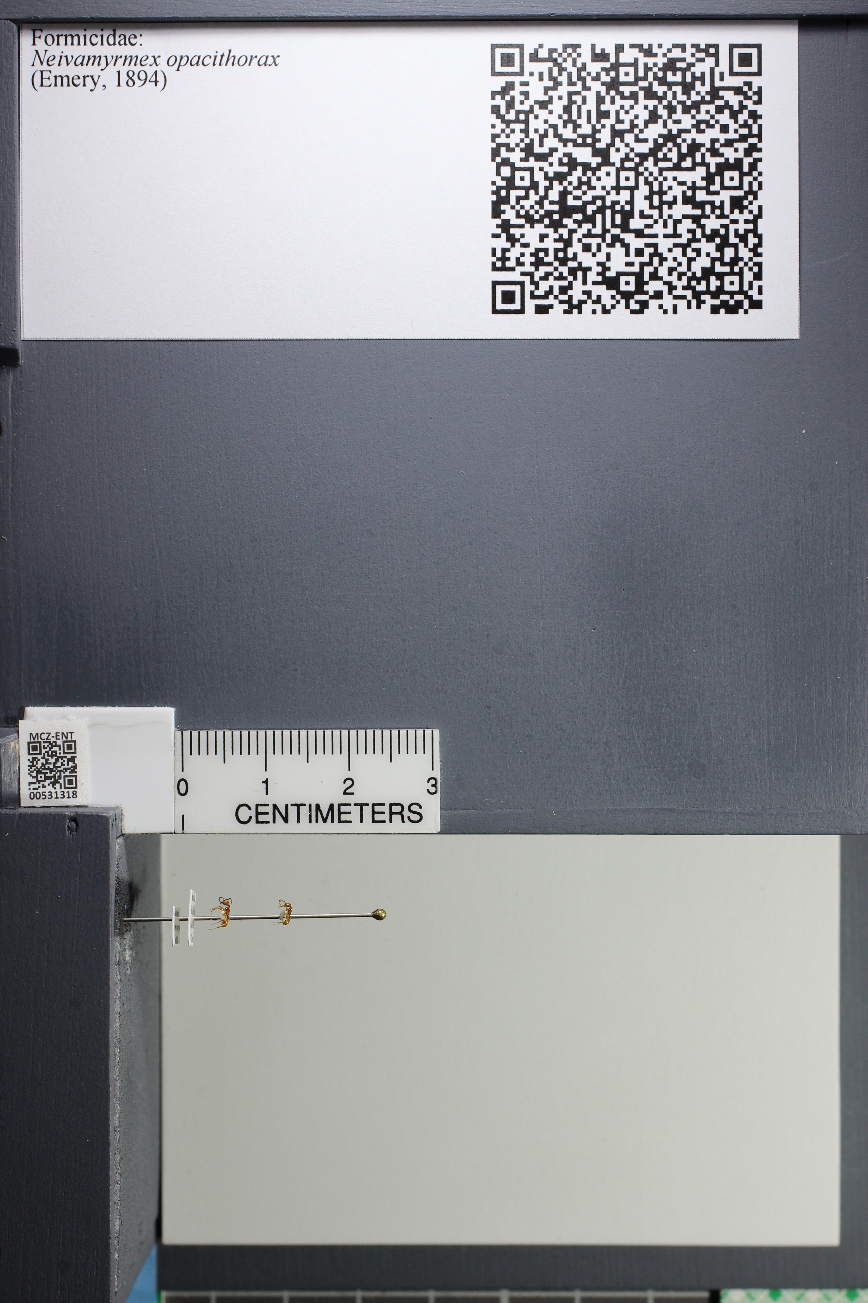 http://mczbase.mcz.harvard.edu/specimen_images/ent-formicidae/datashot/2014_08_10/IMG_303153.JPG