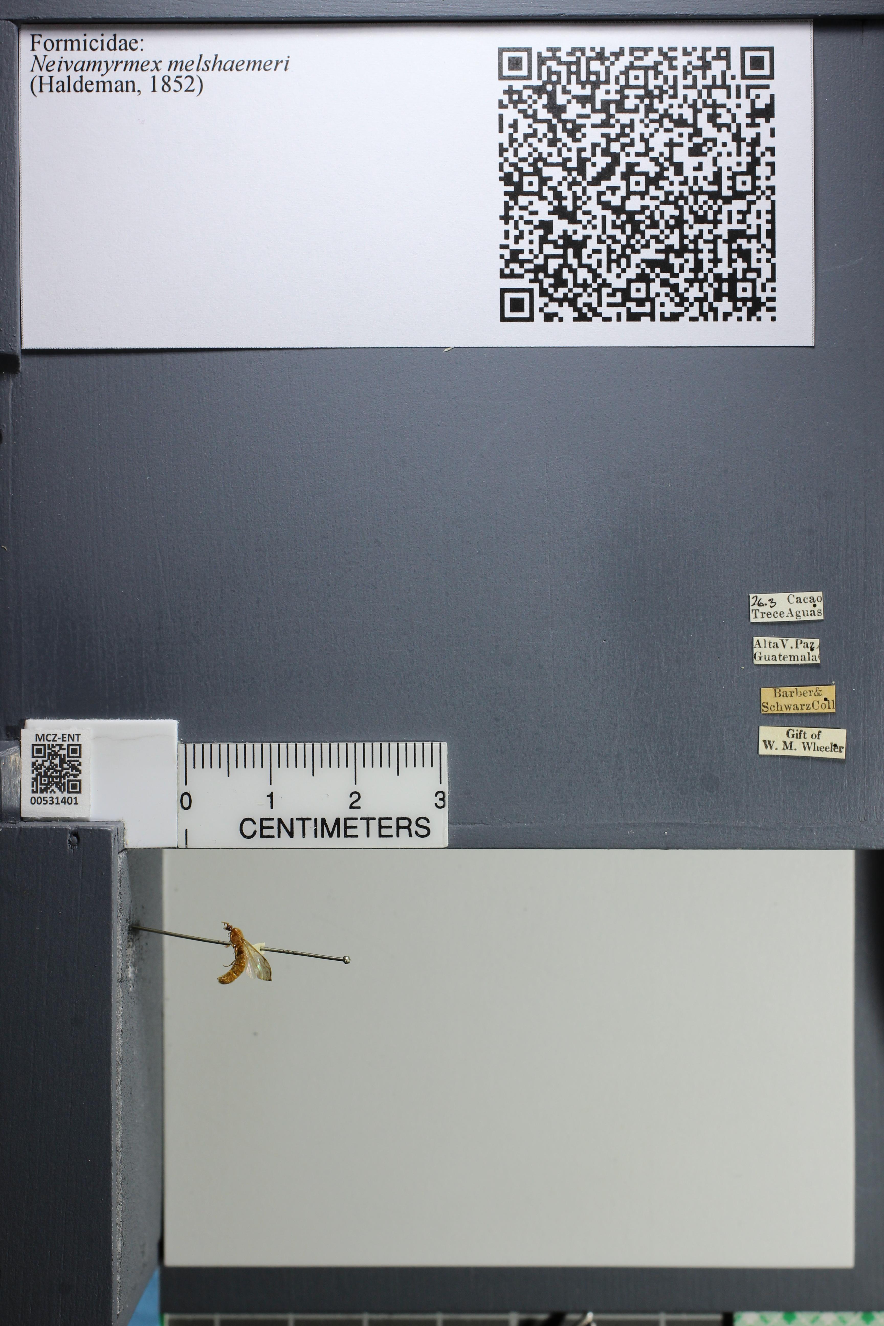 http://mczbase.mcz.harvard.edu/specimen_images/ent-formicidae/datashot/2014_08_10/IMG_303171.JPG