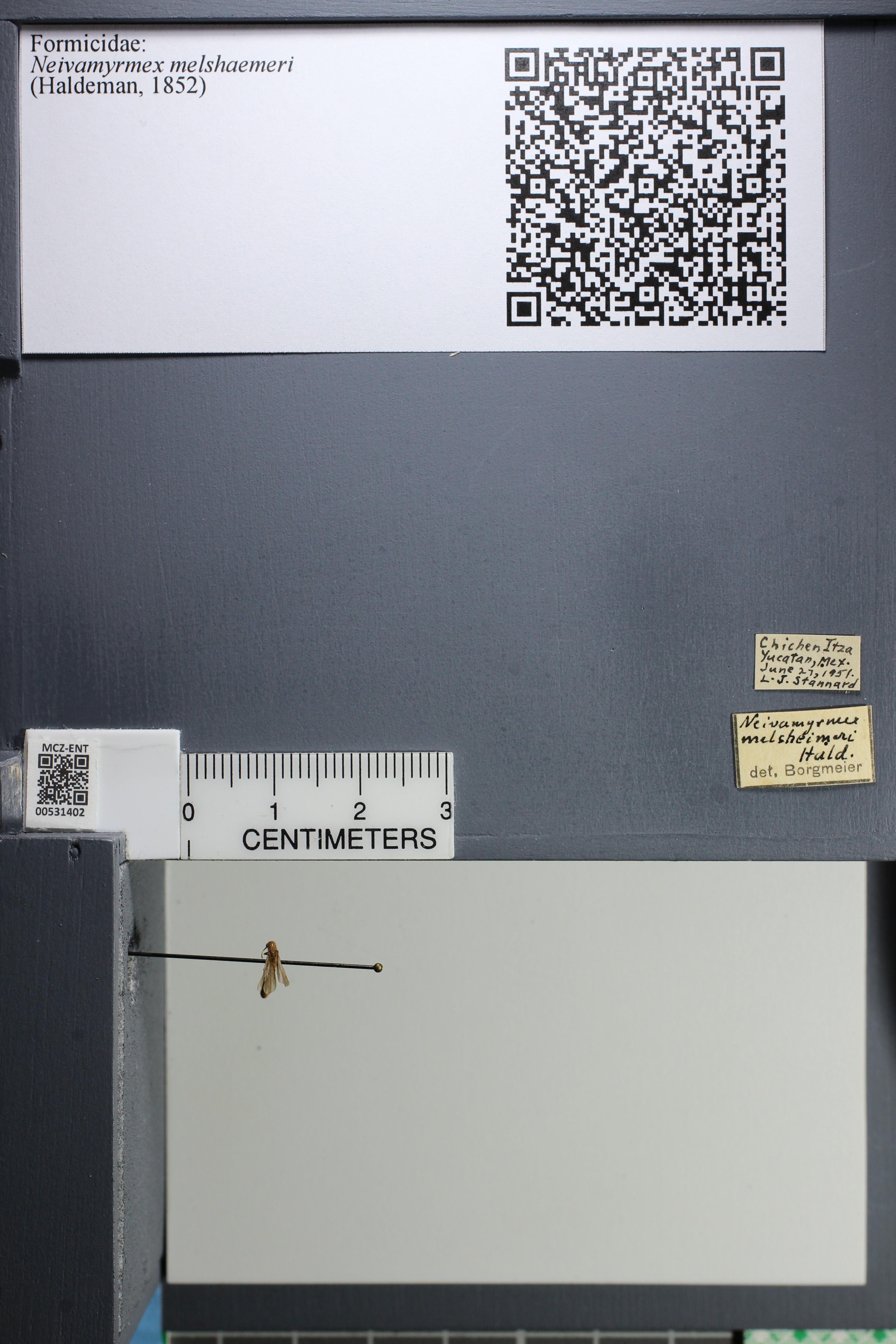 http://mczbase.mcz.harvard.edu/specimen_images/ent-formicidae/datashot/2014_08_10/IMG_303172.JPG