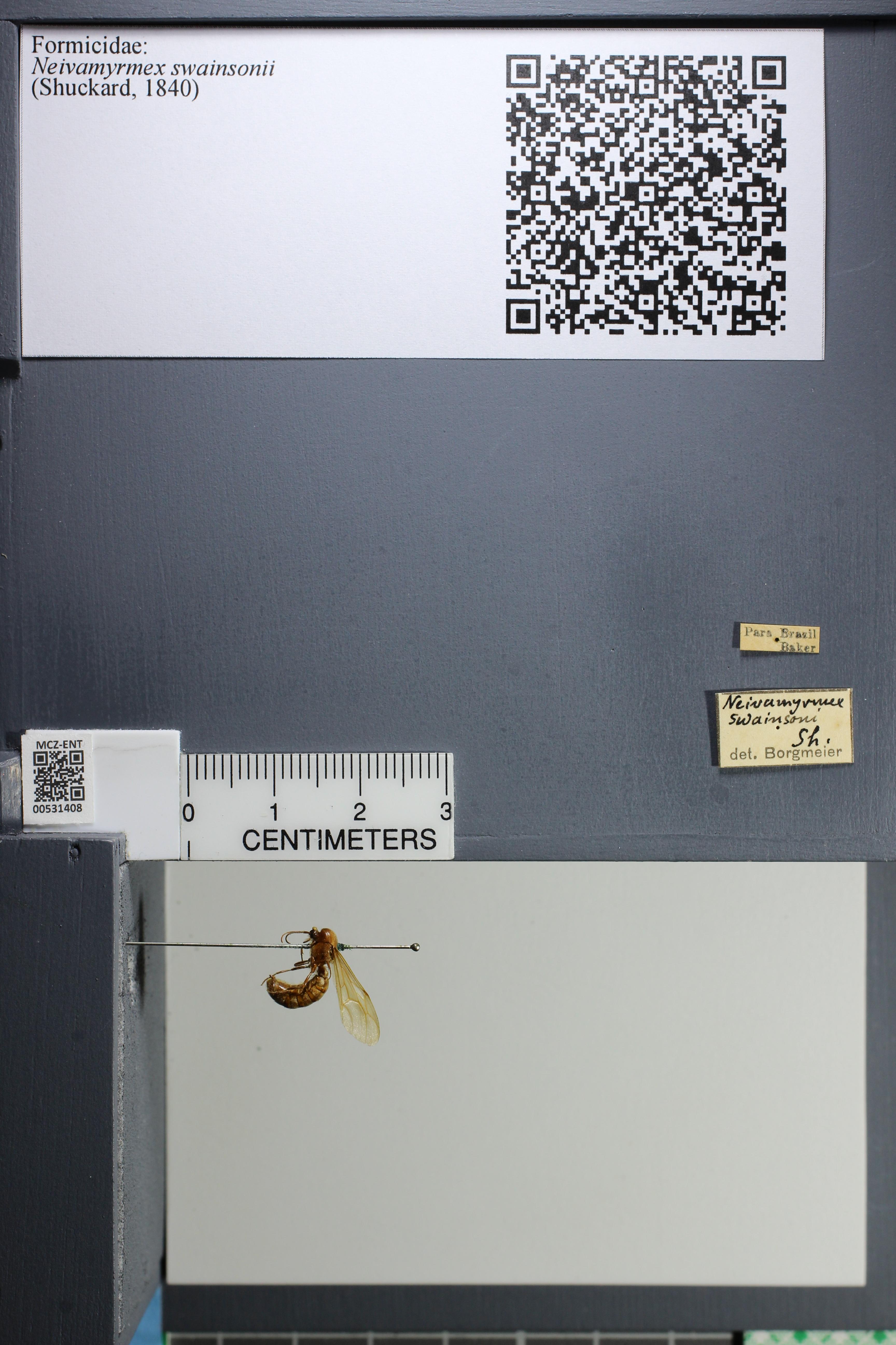 http://mczbase.mcz.harvard.edu/specimen_images/ent-formicidae/datashot/2014_08_10/IMG_303178.JPG