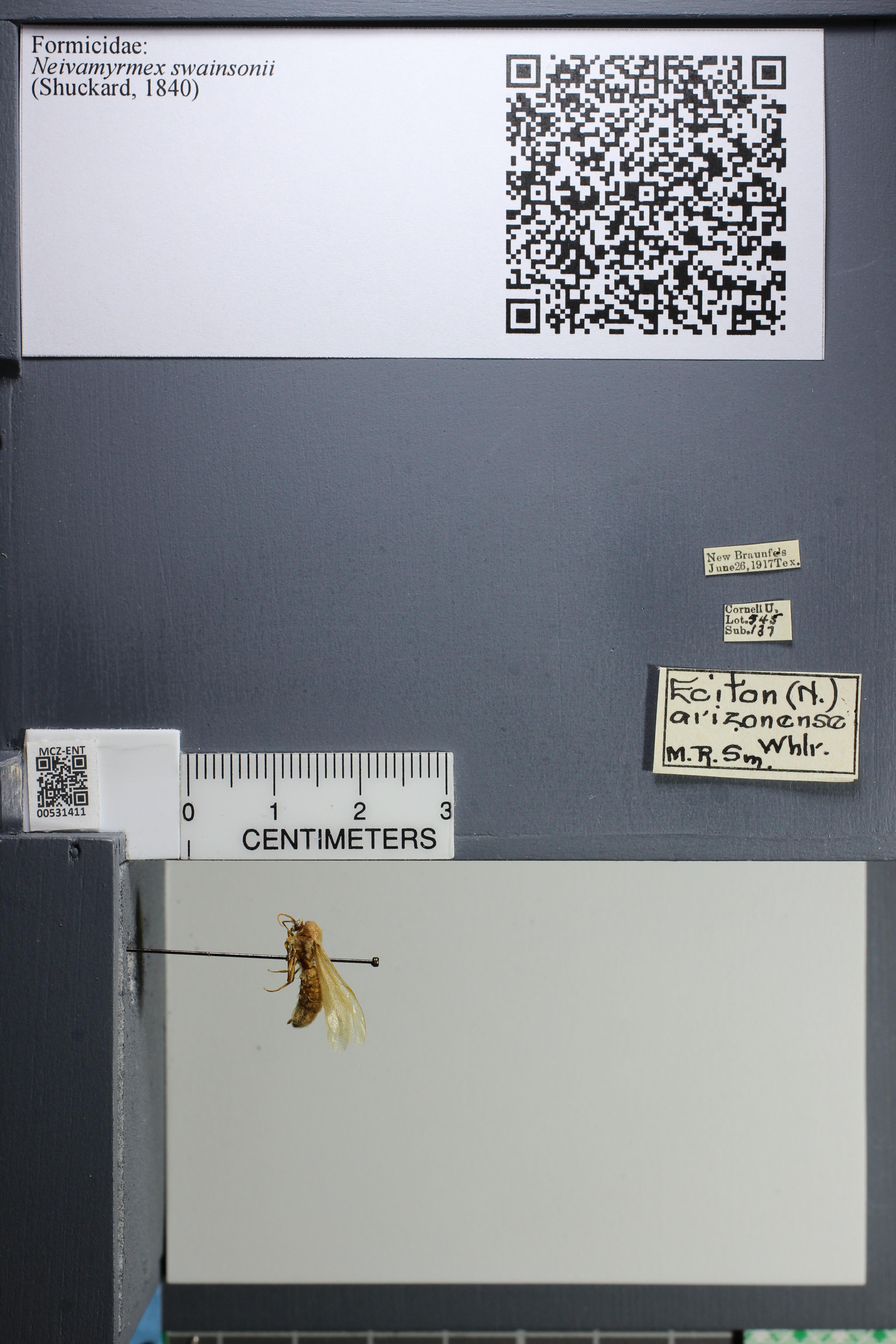 http://mczbase.mcz.harvard.edu/specimen_images/ent-formicidae/datashot/2014_08_10/IMG_303181.JPG
