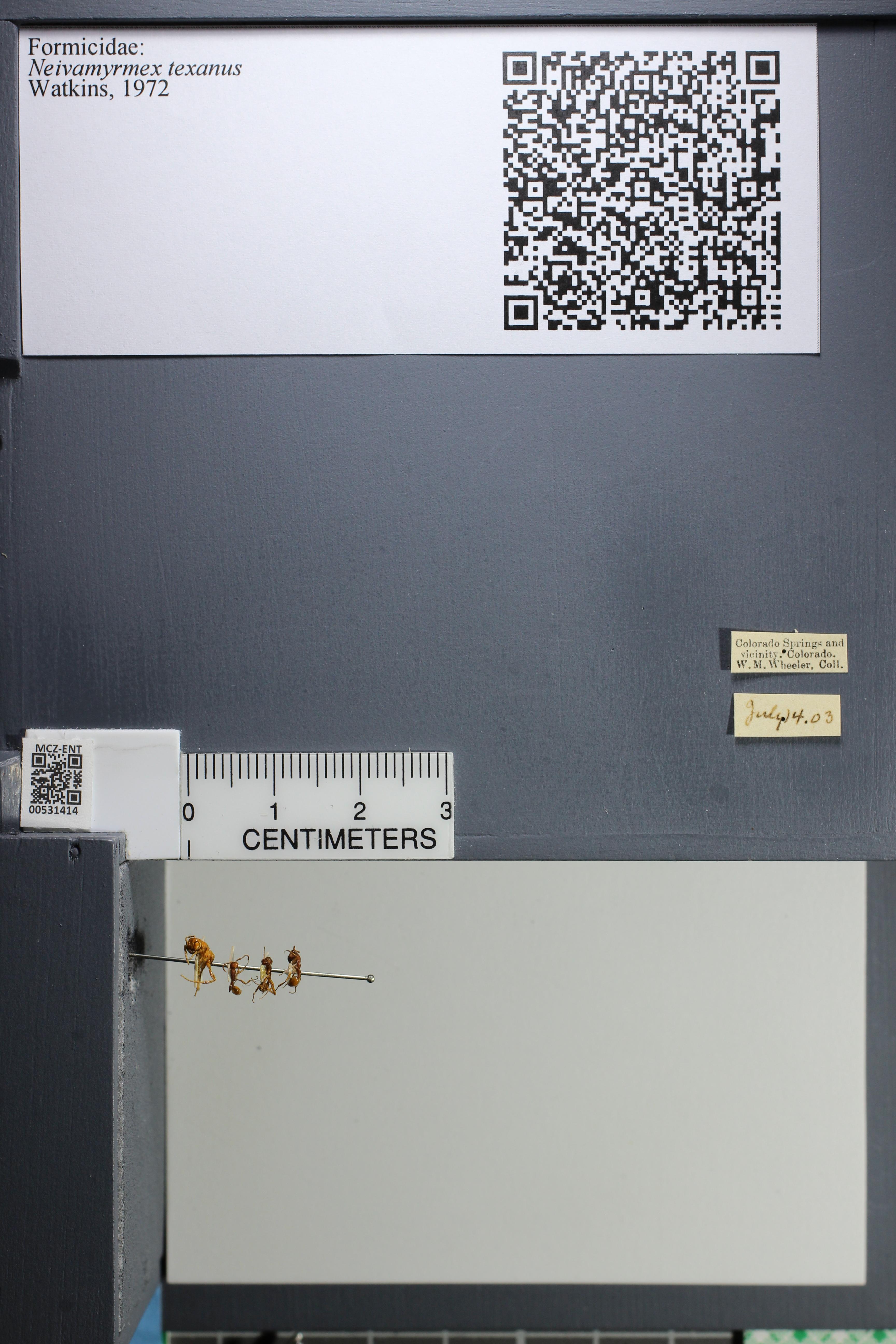 http://mczbase.mcz.harvard.edu/specimen_images/ent-formicidae/datashot/2014_08_10/IMG_303184.JPG