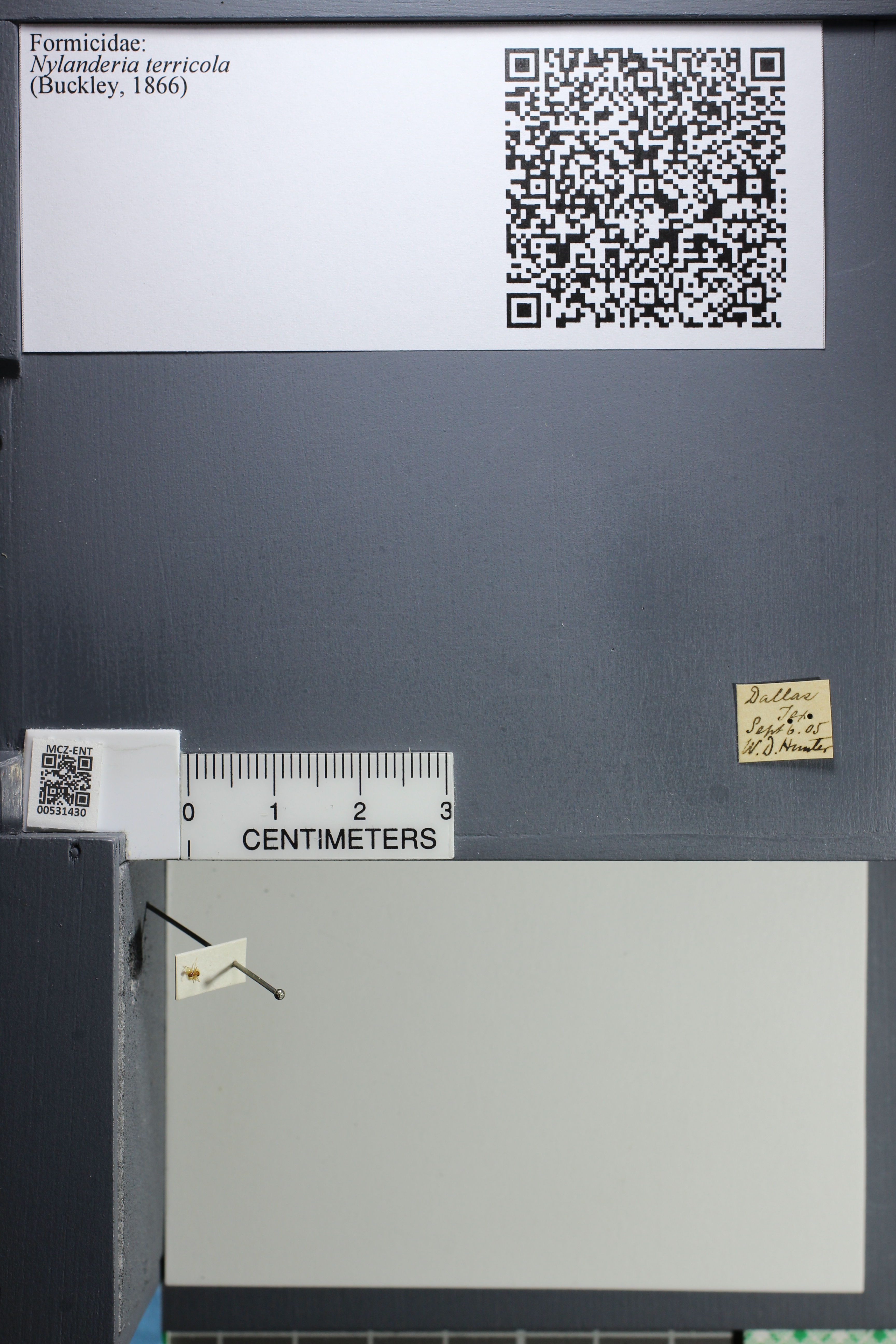 http://mczbase.mcz.harvard.edu/specimen_images/ent-formicidae/datashot/2014_08_10/IMG_303201.JPG