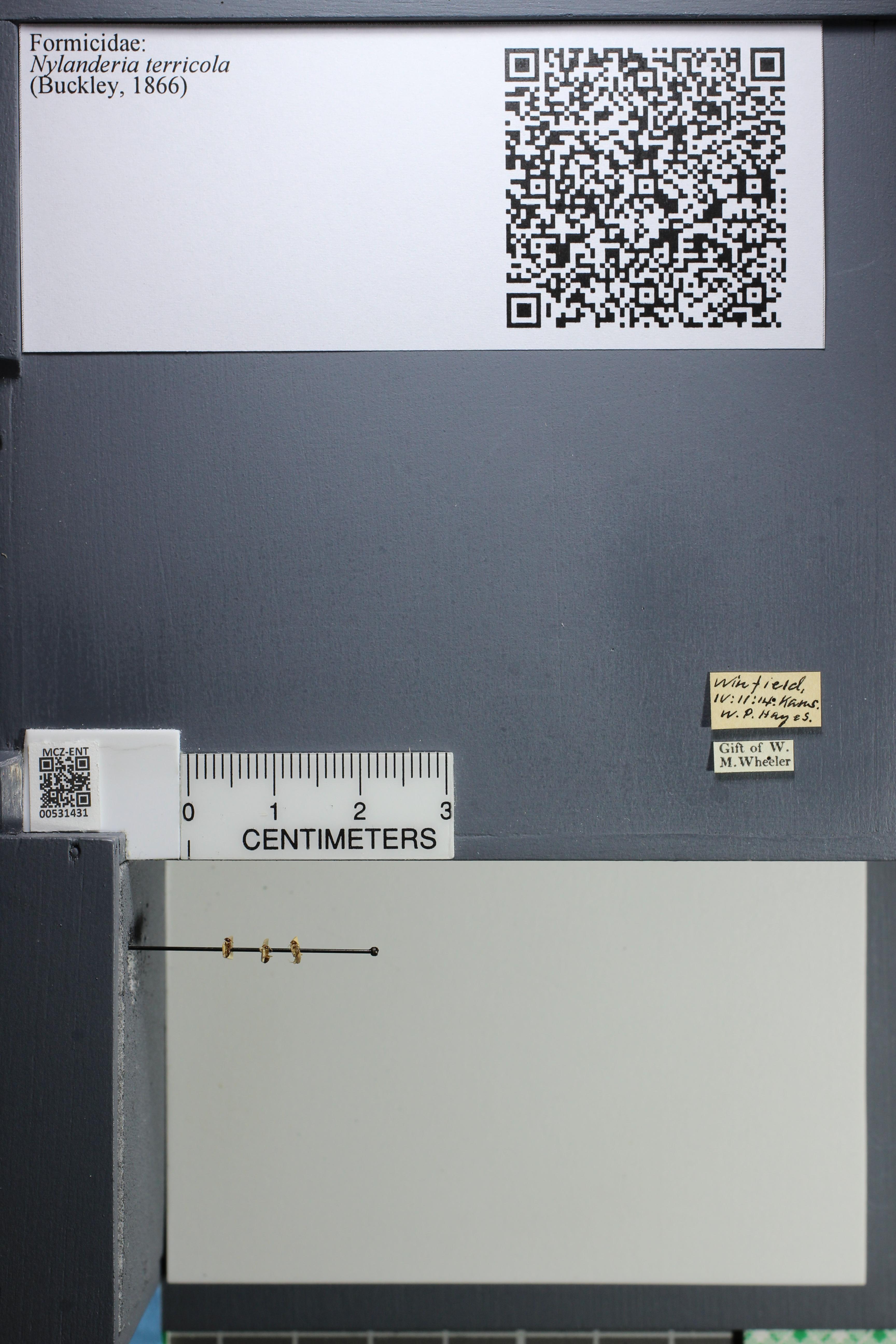 http://mczbase.mcz.harvard.edu/specimen_images/ent-formicidae/datashot/2014_08_10/IMG_303202.JPG