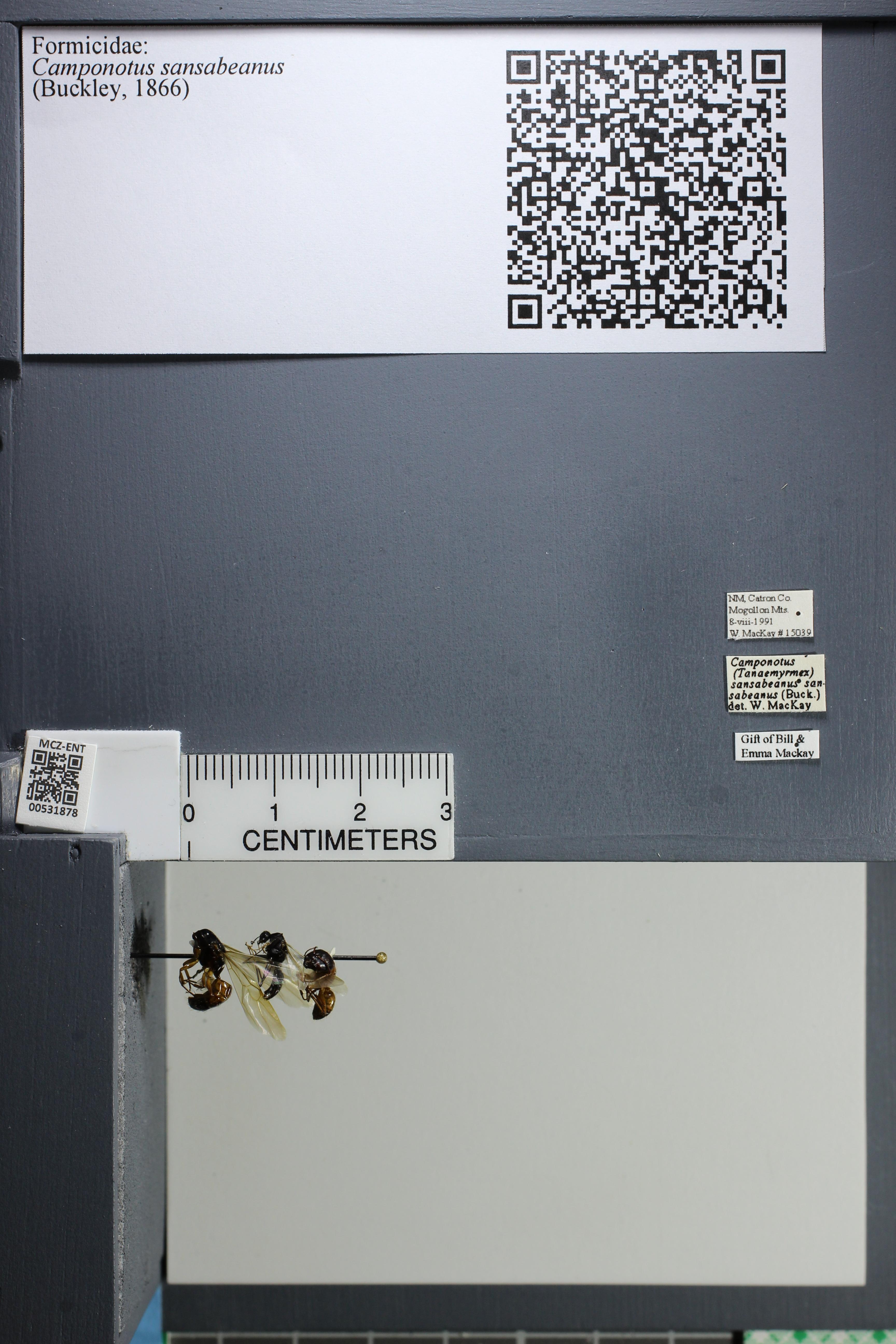 http://mczbase.mcz.harvard.edu/specimen_images/ent-formicidae/datashot/2014_08_19/IMG_303692.JPG
