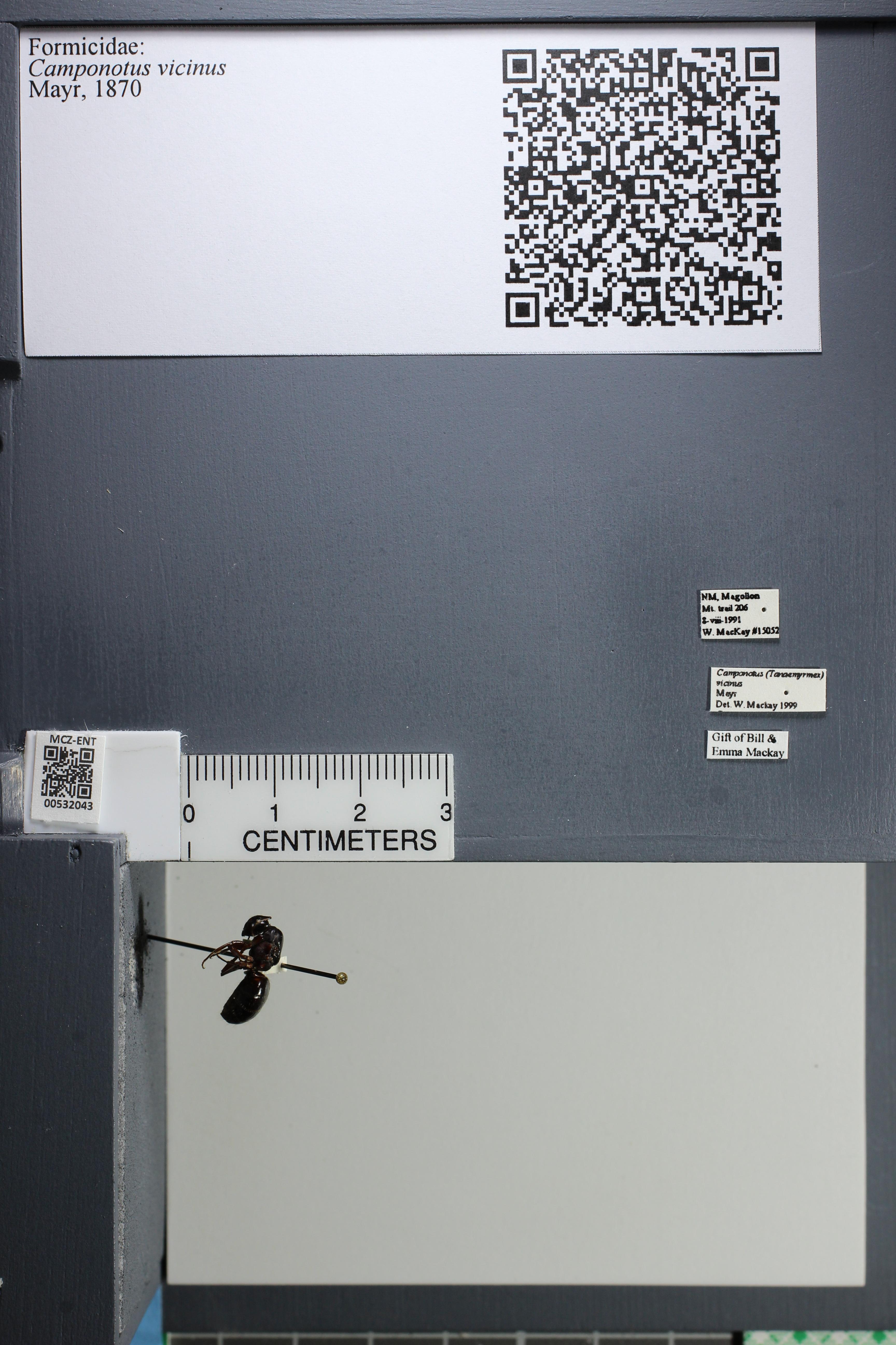 http://mczbase.mcz.harvard.edu/specimen_images/ent-formicidae/datashot/2014_08_20/IMG_303861.JPG