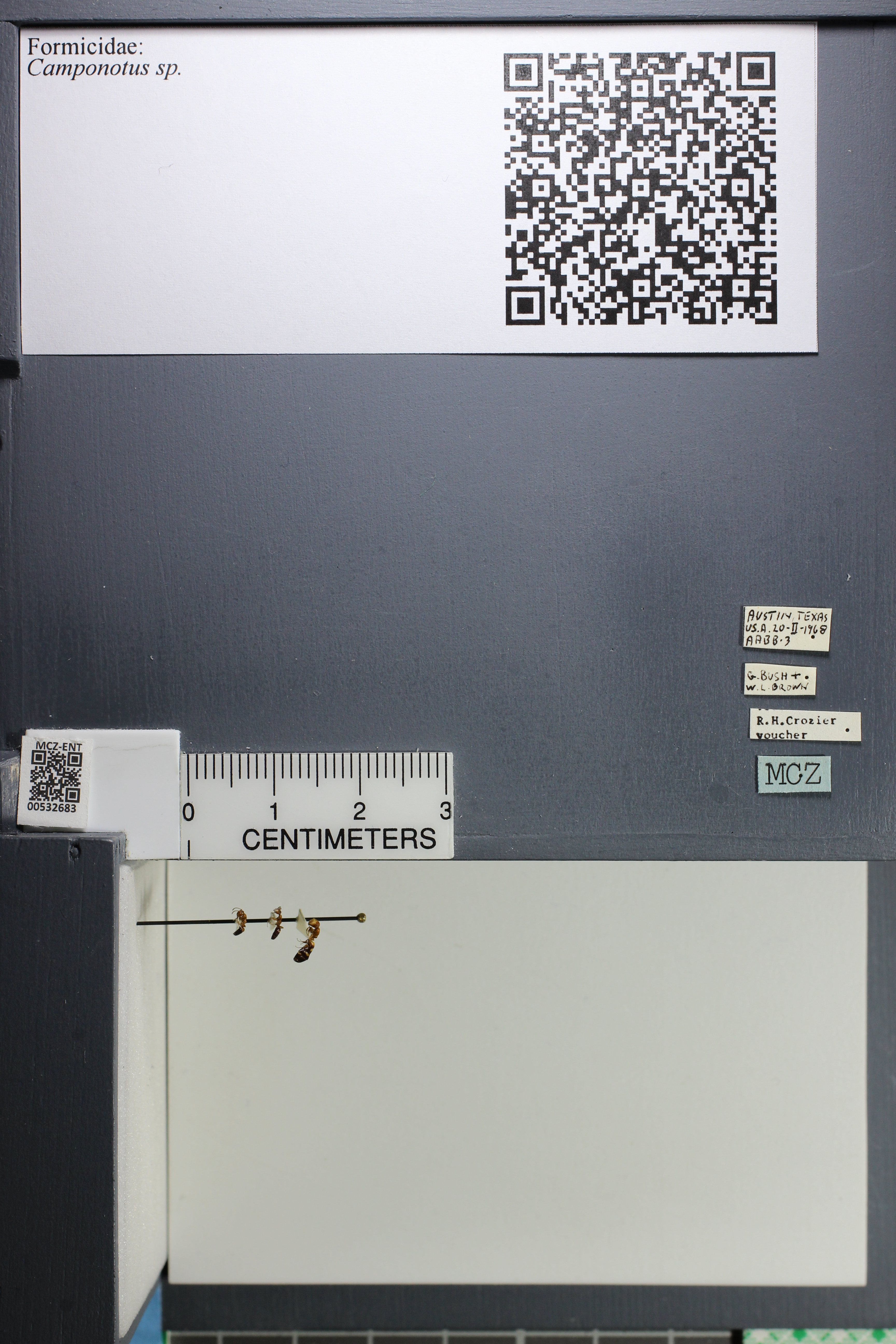 http://mczbase.mcz.harvard.edu/specimen_images/ent-formicidae/datashot/2014_09_02/IMG_304478.JPG