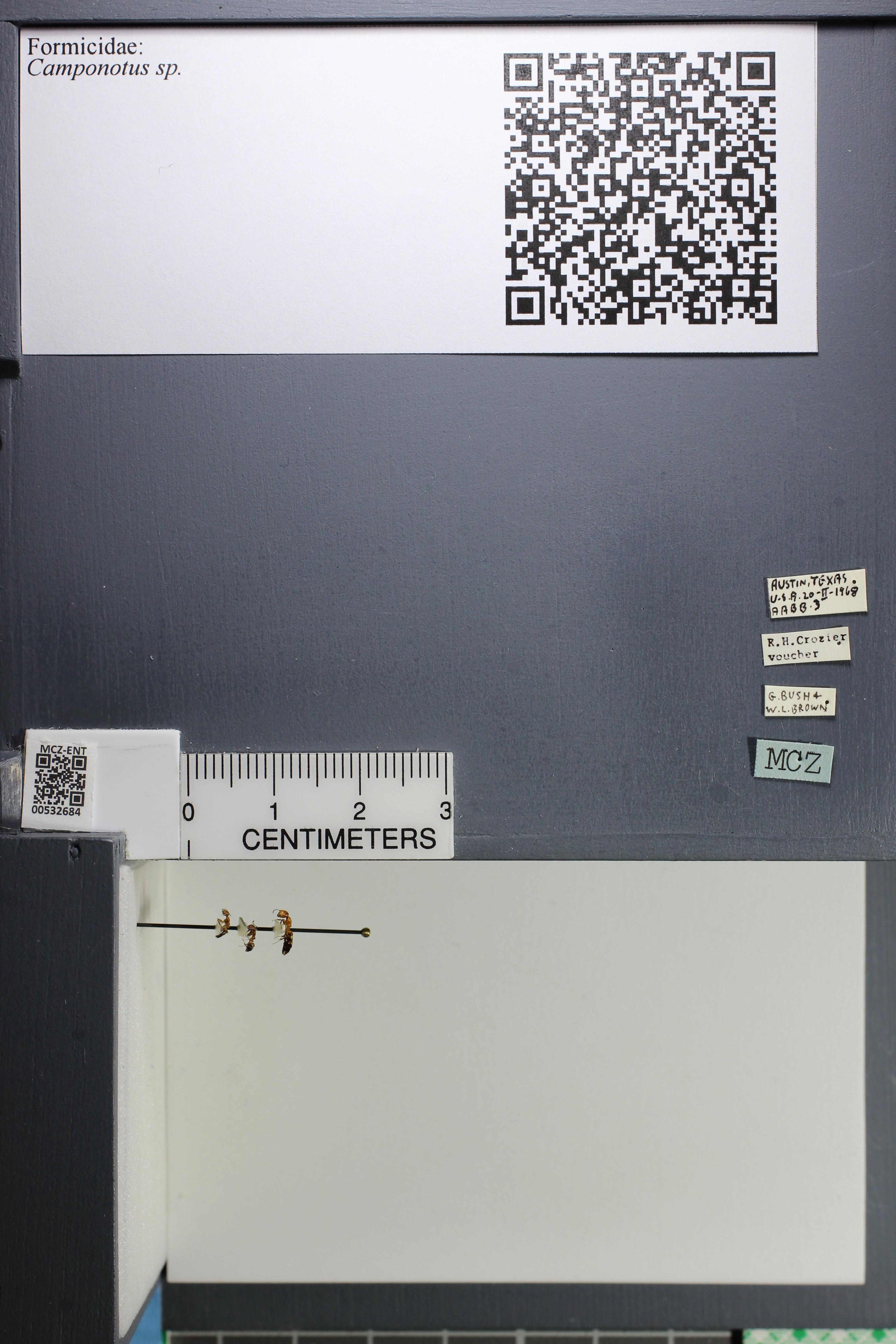 http://mczbase.mcz.harvard.edu/specimen_images/ent-formicidae/datashot/2014_09_02/IMG_304479.JPG