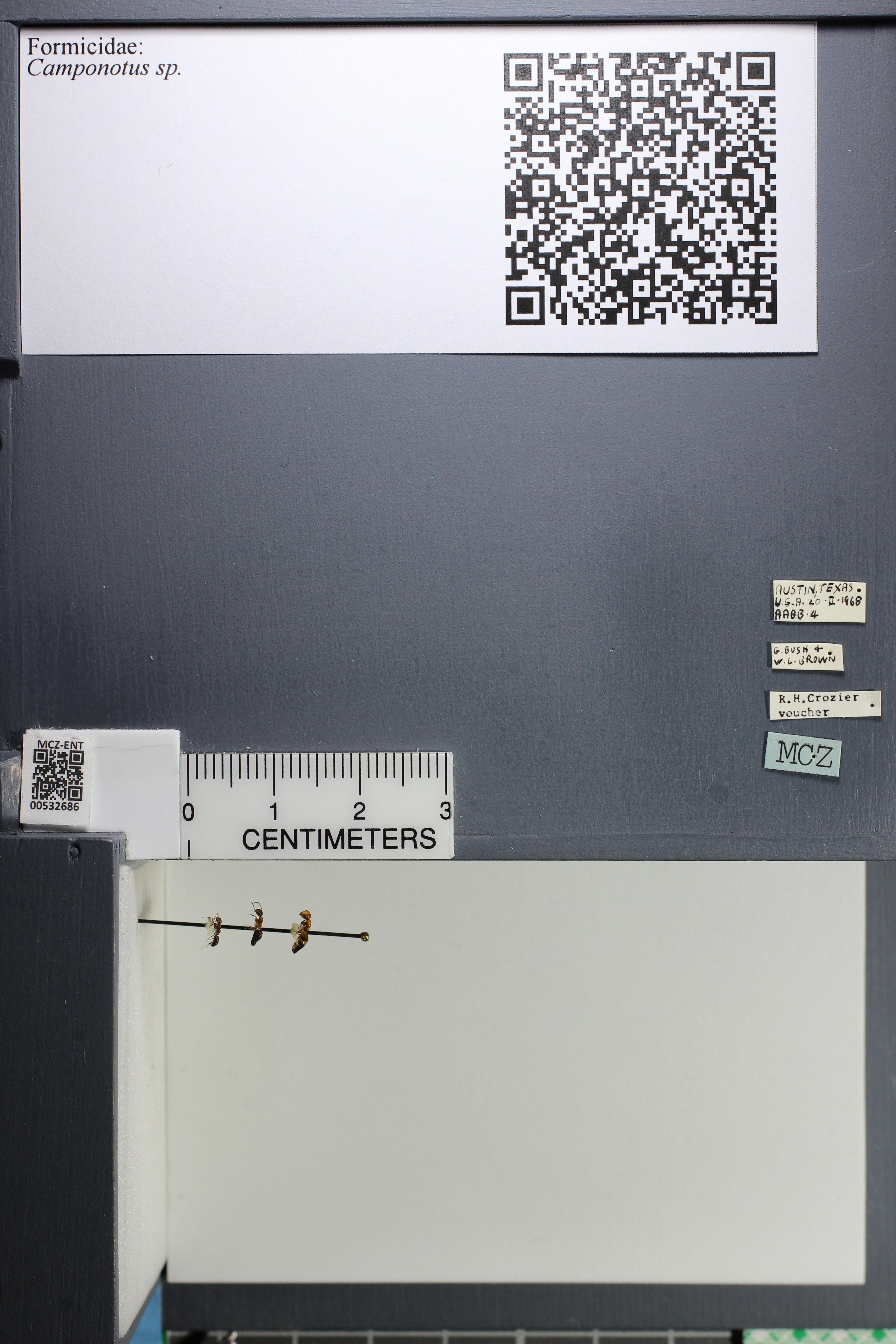 http://mczbase.mcz.harvard.edu/specimen_images/ent-formicidae/datashot/2014_09_02/IMG_304481.JPG