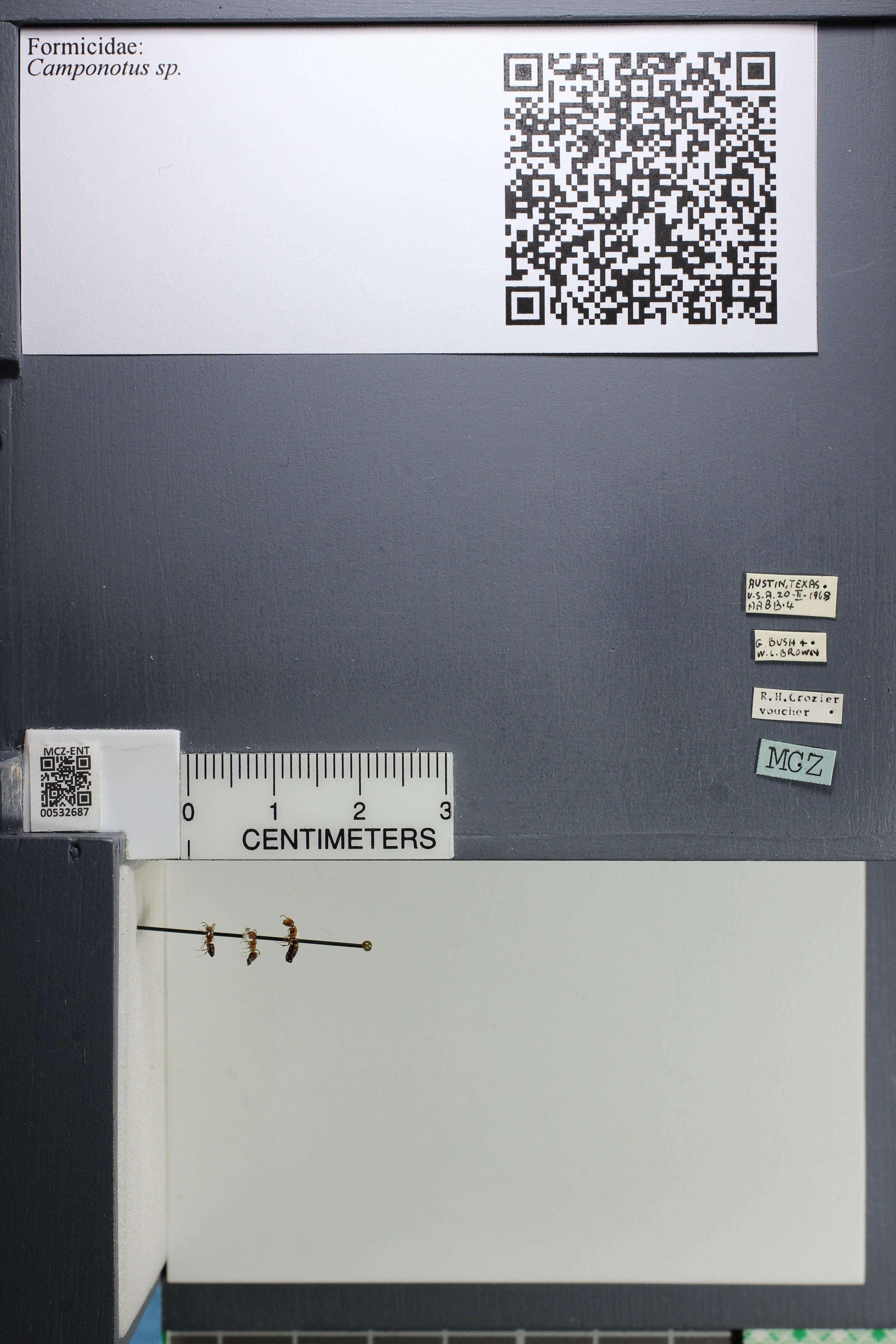 http://mczbase.mcz.harvard.edu/specimen_images/ent-formicidae/datashot/2014_09_02/IMG_304482.JPG