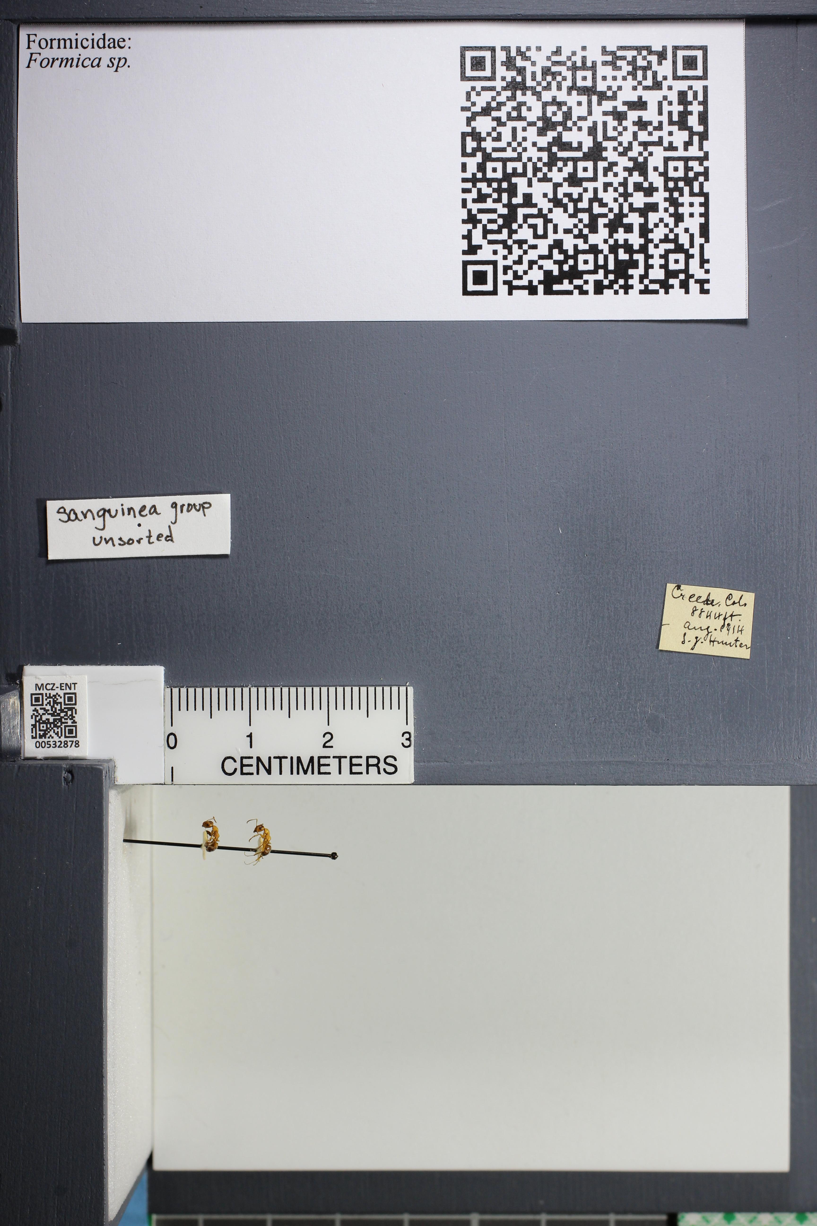 http://mczbase.mcz.harvard.edu/specimen_images/ent-formicidae/datashot/2014_09_08/IMG_304695.JPG