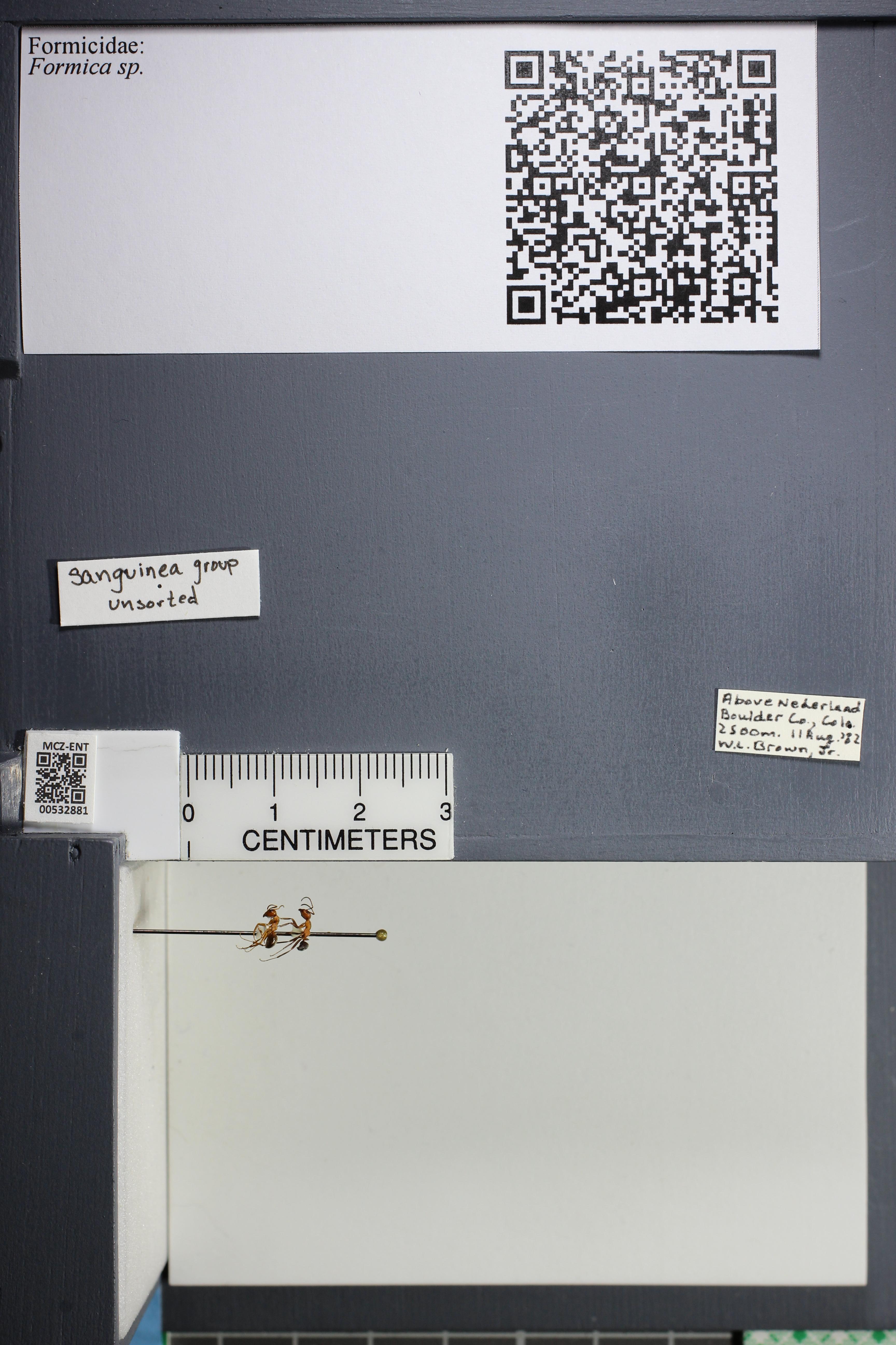 http://mczbase.mcz.harvard.edu/specimen_images/ent-formicidae/datashot/2014_09_08/IMG_304699.JPG