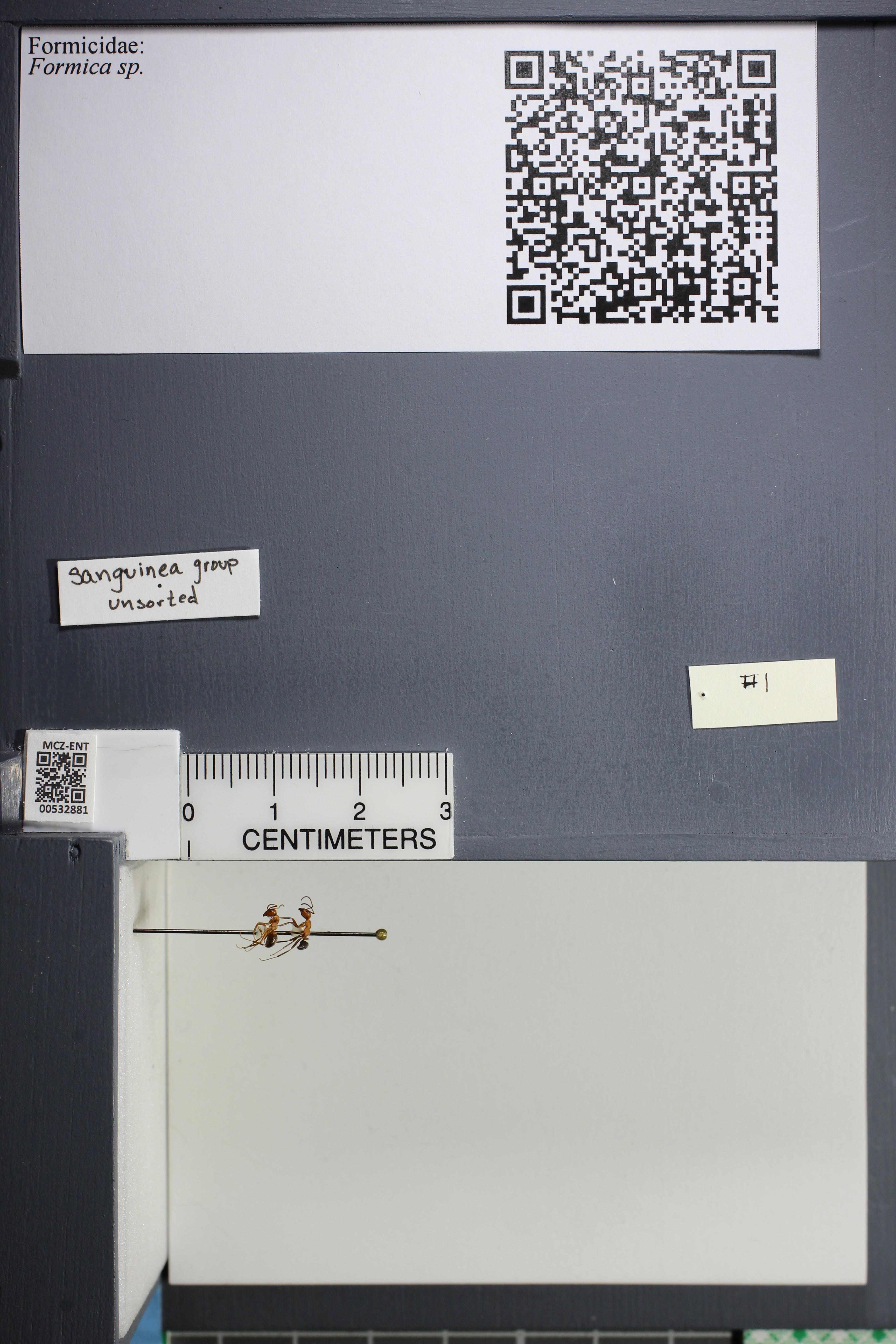 http://mczbase.mcz.harvard.edu/specimen_images/ent-formicidae/datashot/2014_09_08/IMG_304700.JPG