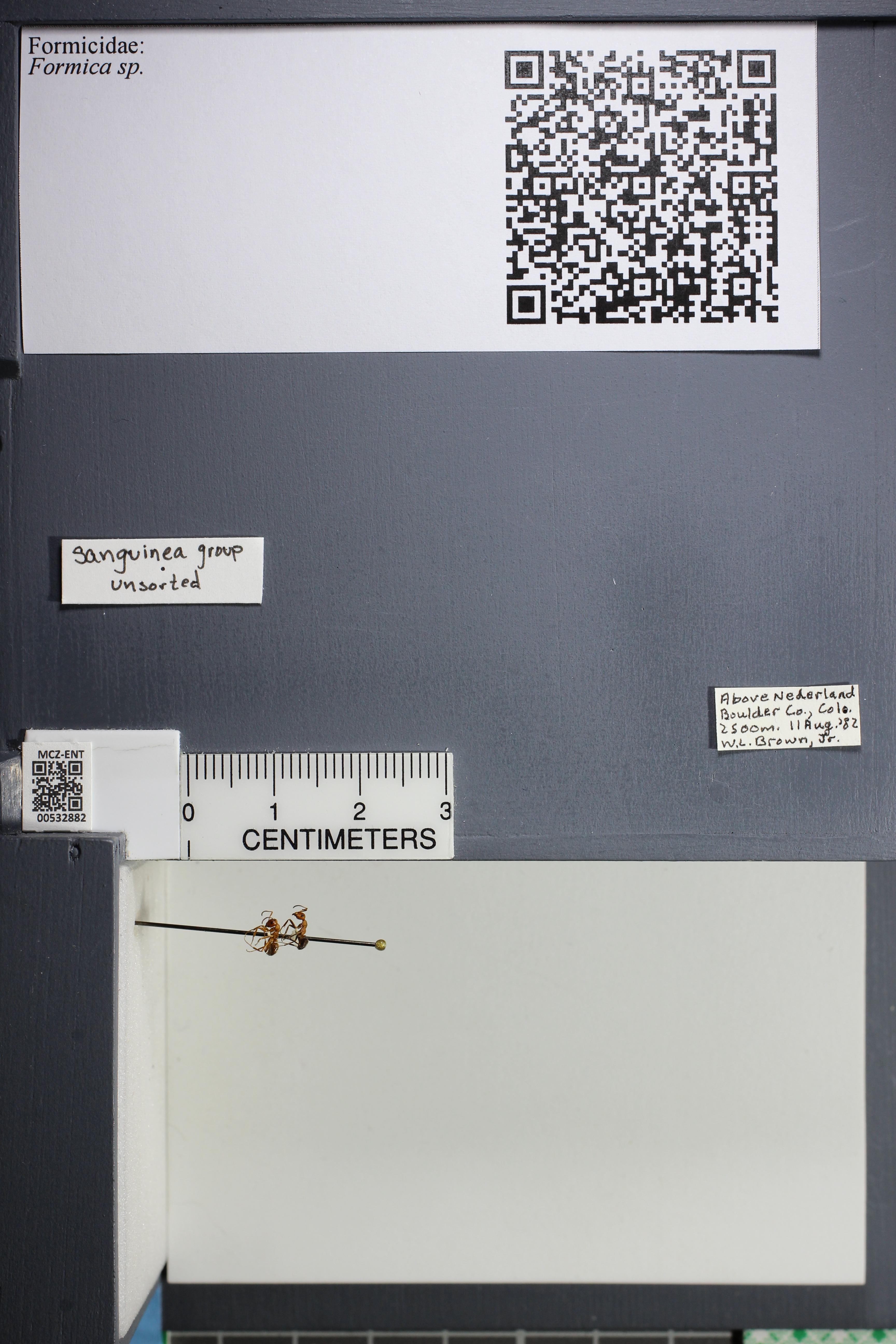 http://mczbase.mcz.harvard.edu/specimen_images/ent-formicidae/datashot/2014_09_08/IMG_304701.JPG