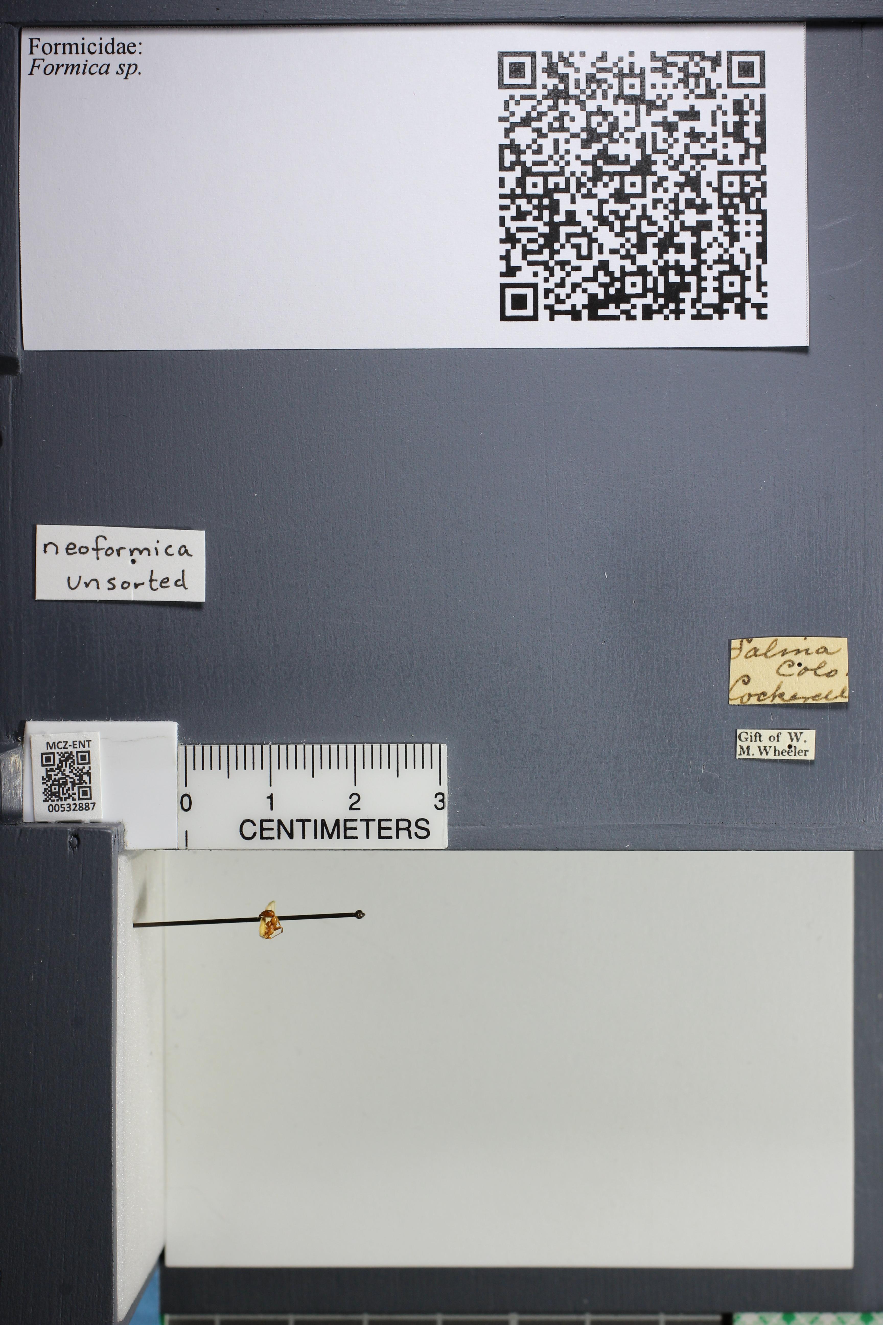 http://mczbase.mcz.harvard.edu/specimen_images/ent-formicidae/datashot/2014_09_08/IMG_304707.JPG