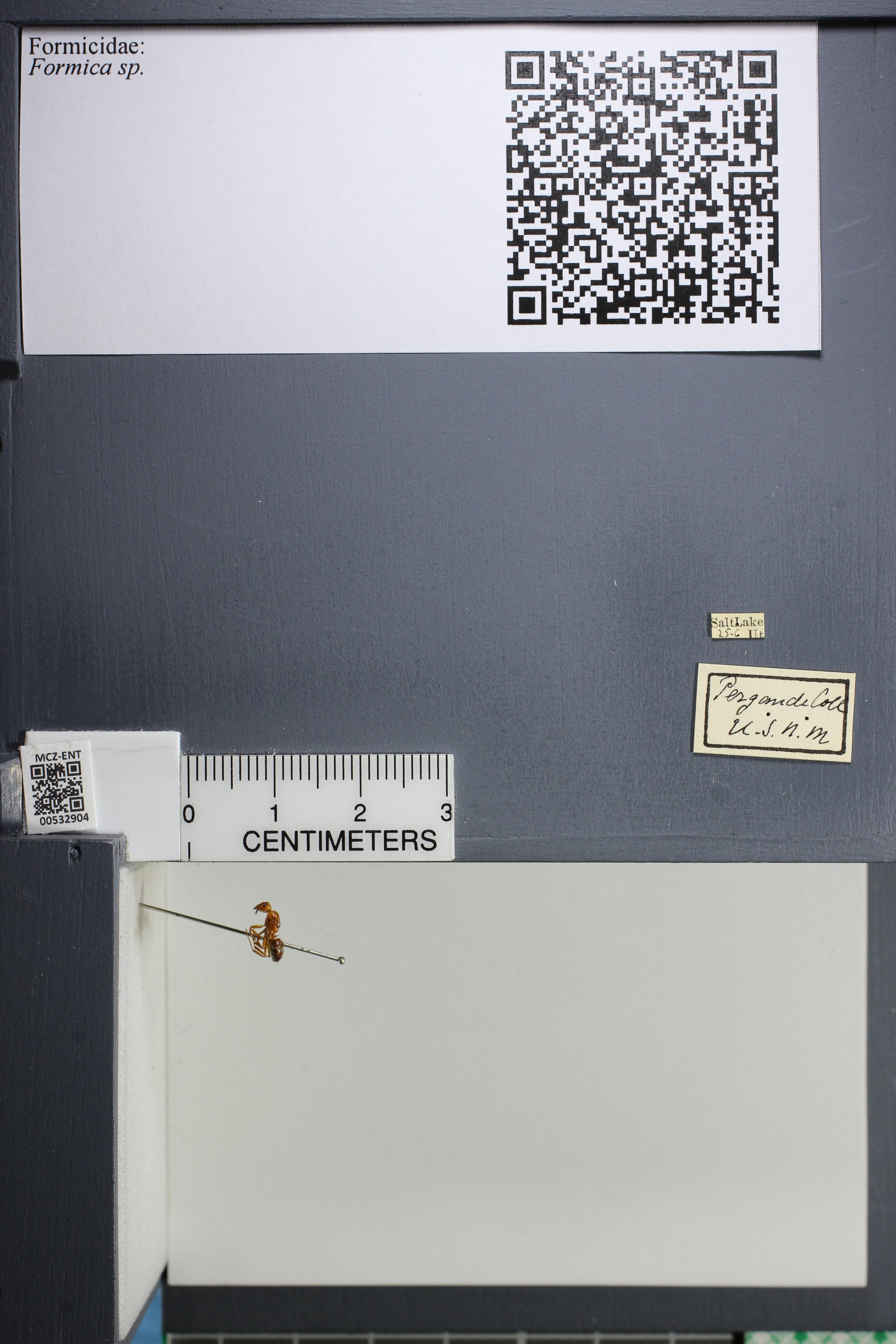 http://mczbase.mcz.harvard.edu/specimen_images/ent-formicidae/datashot/2014_09_08/IMG_304724.JPG
