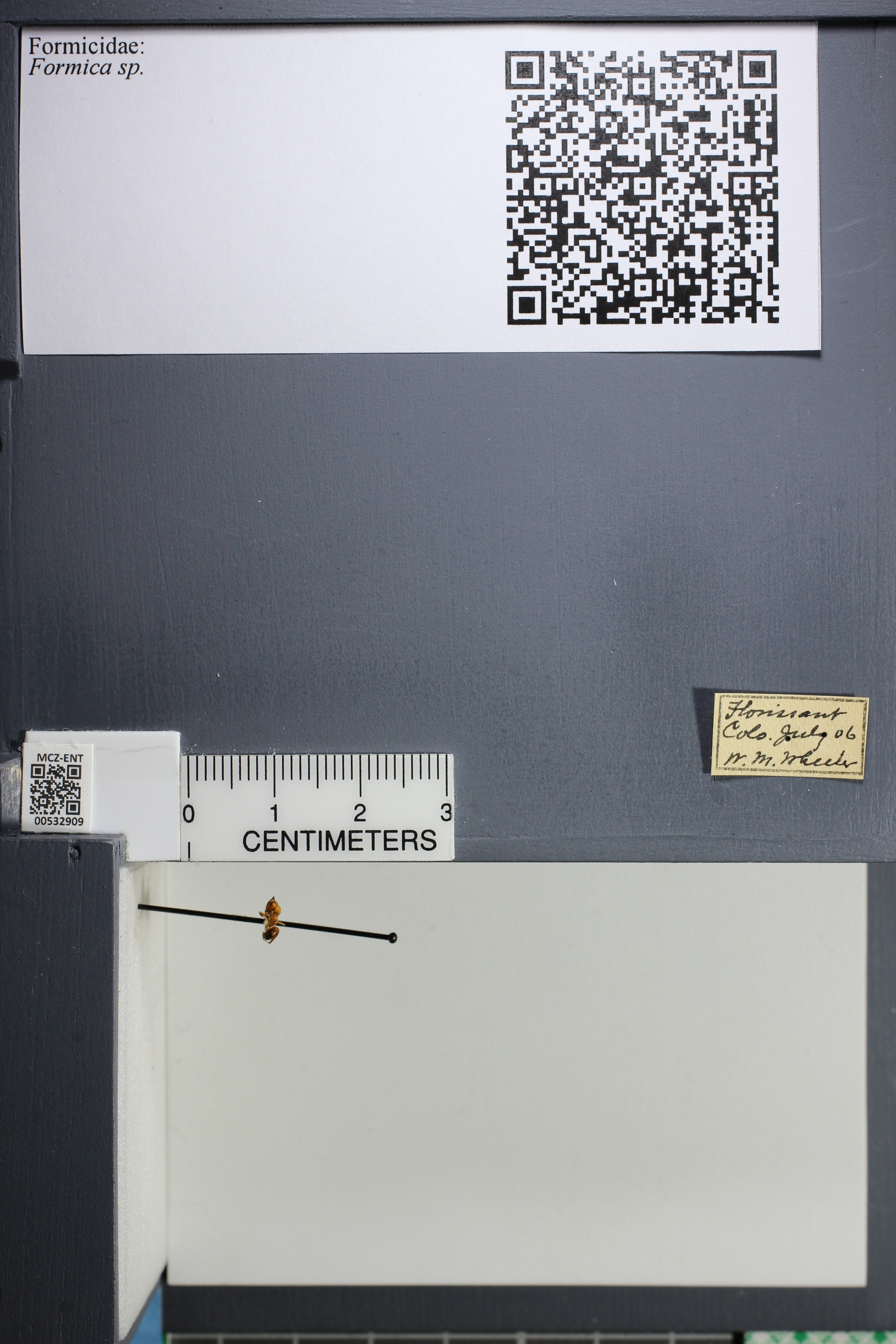 http://mczbase.mcz.harvard.edu/specimen_images/ent-formicidae/datashot/2014_09_08/IMG_304729.JPG