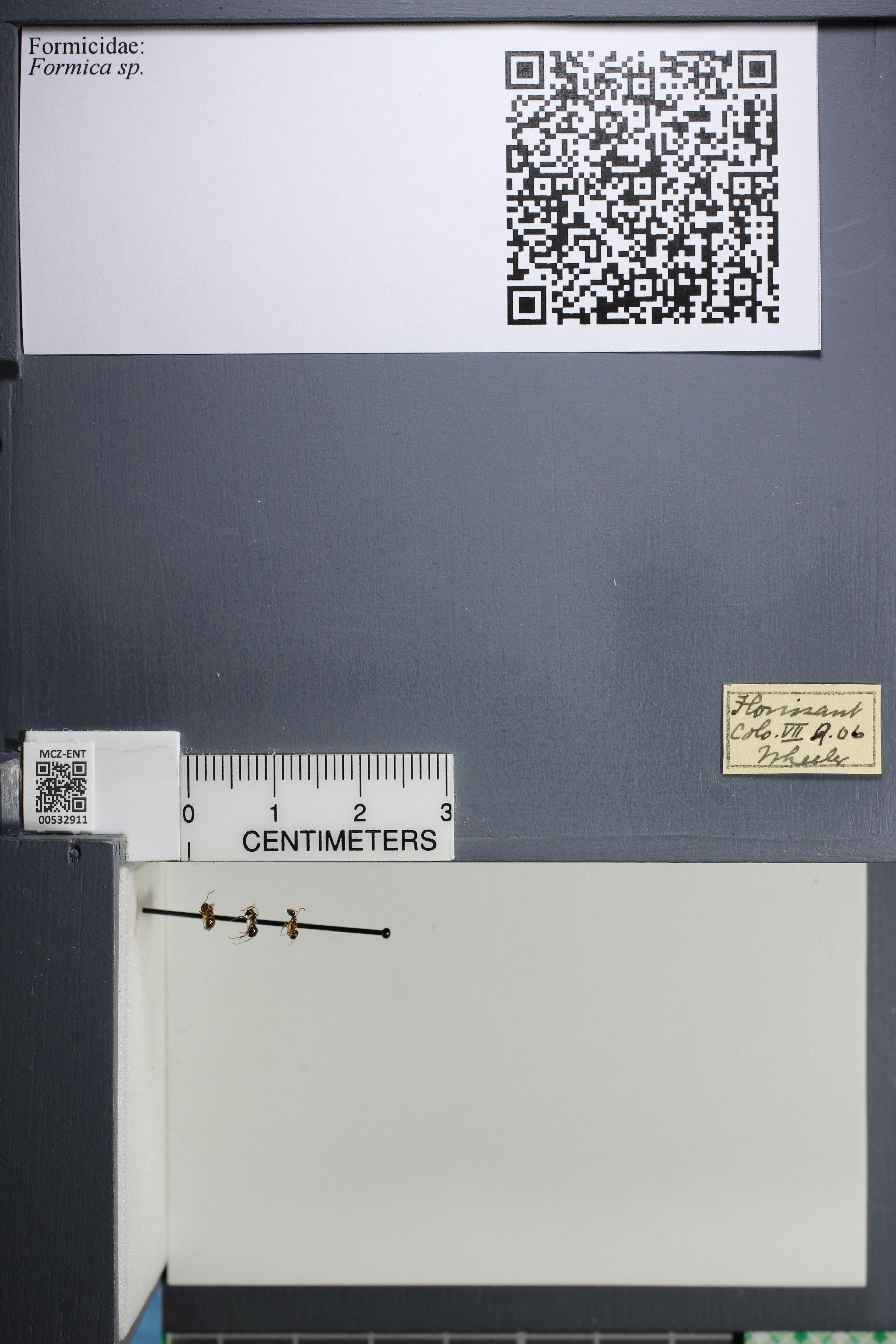 http://mczbase.mcz.harvard.edu/specimen_images/ent-formicidae/datashot/2014_09_08/IMG_304731.JPG