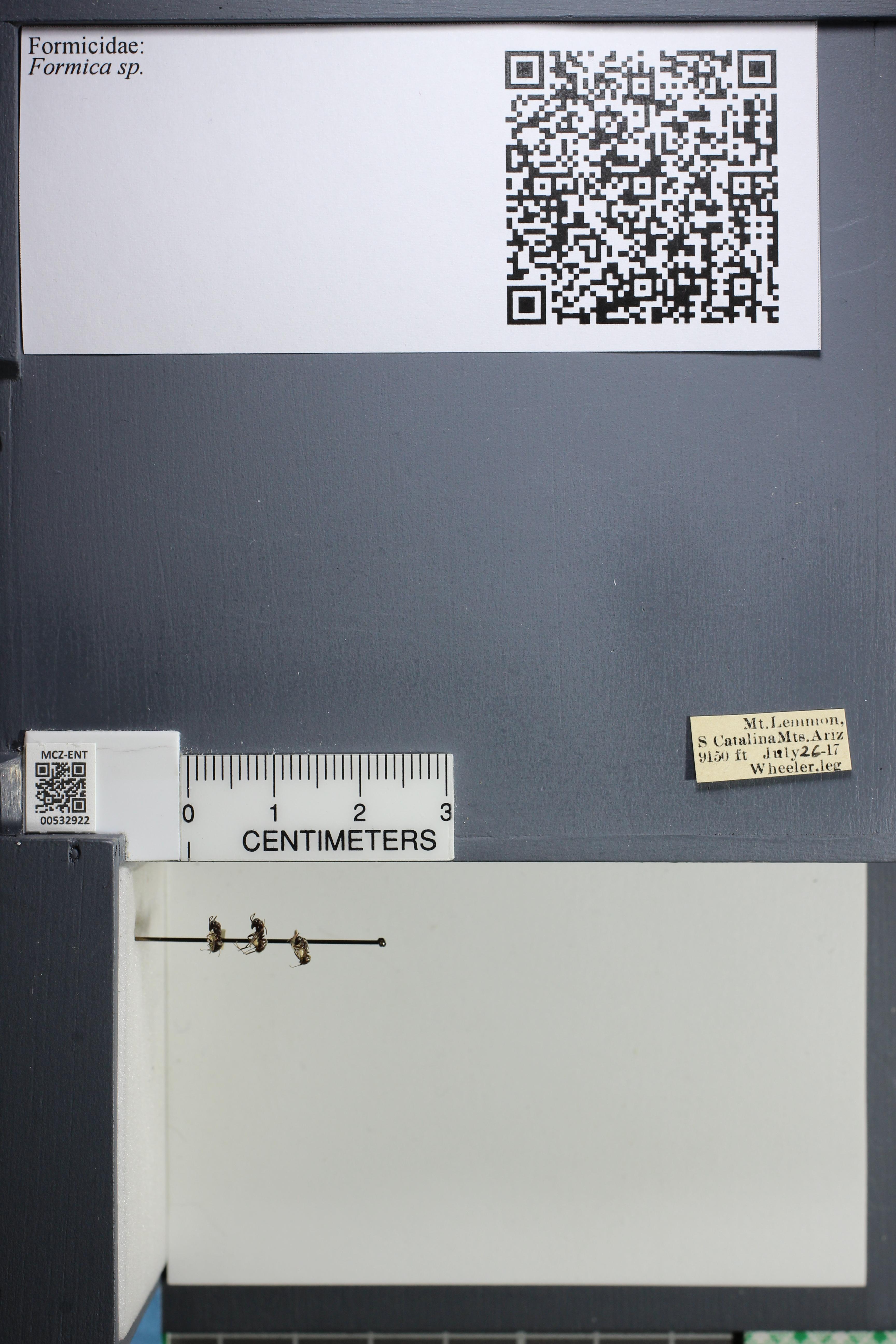 http://mczbase.mcz.harvard.edu/specimen_images/ent-formicidae/datashot/2014_09_08/IMG_304742.JPG