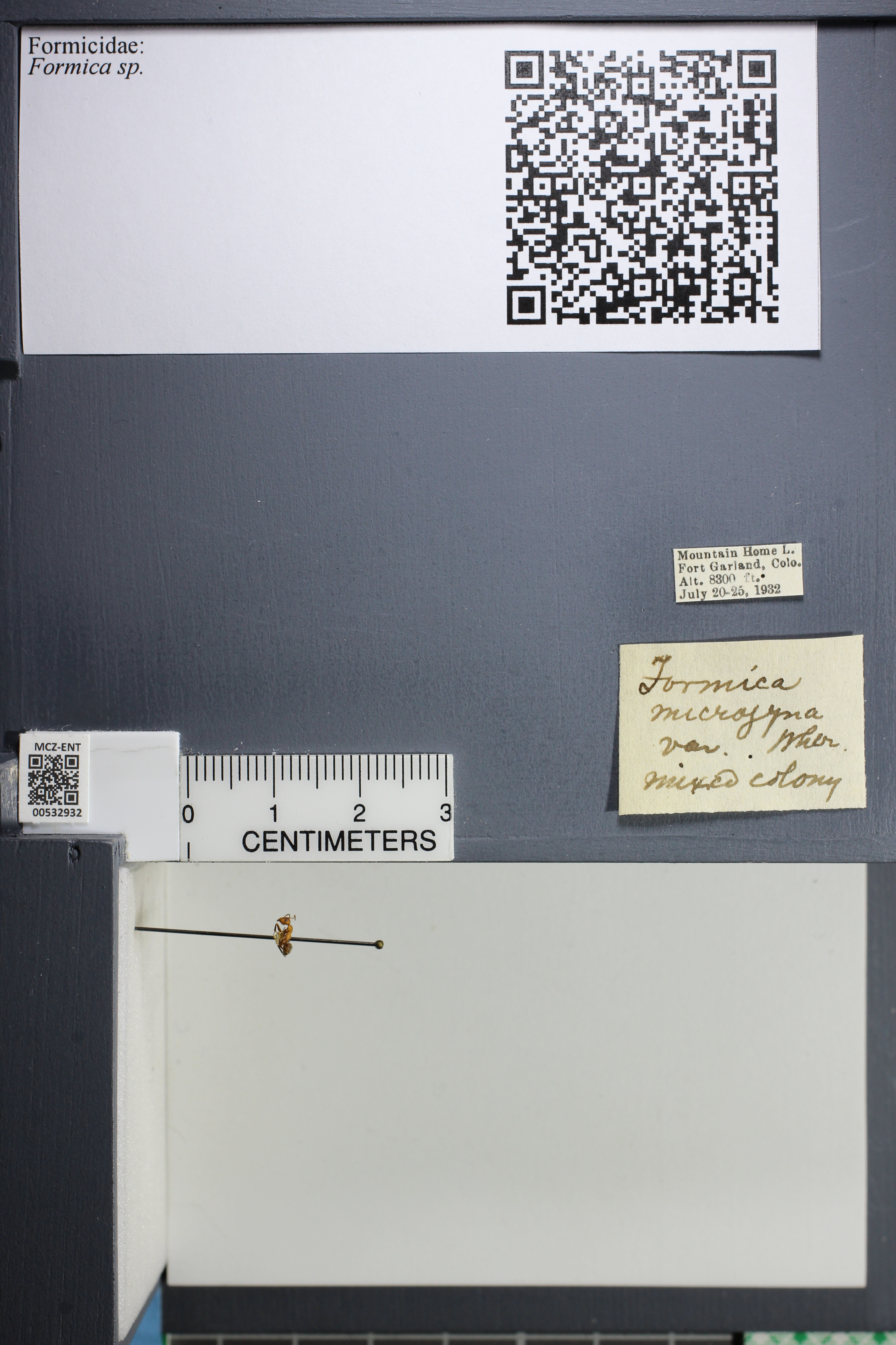 http://mczbase.mcz.harvard.edu/specimen_images/ent-formicidae/datashot/2014_09_08/IMG_304752.JPG
