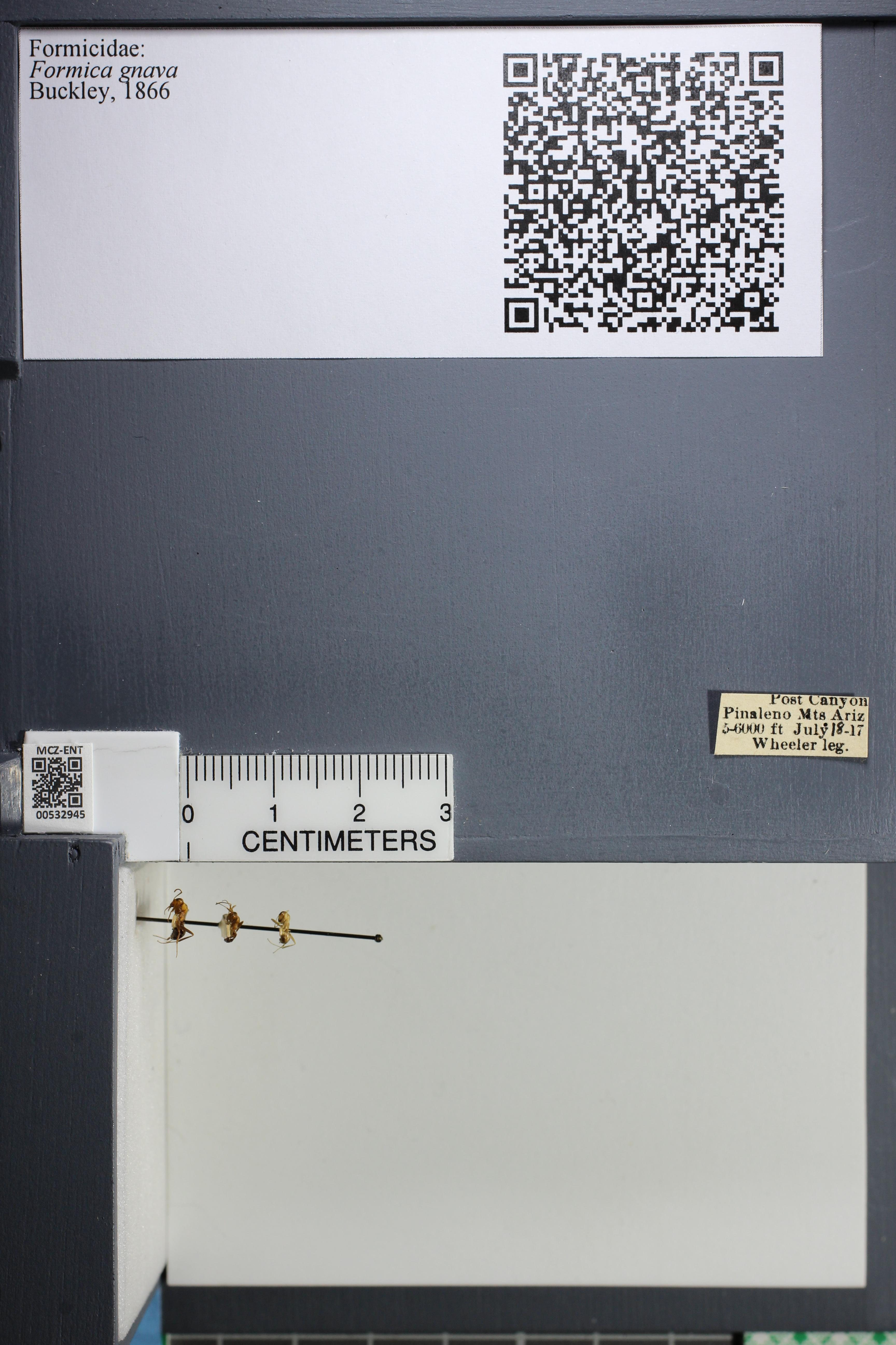 http://mczbase.mcz.harvard.edu/specimen_images/ent-formicidae/datashot/2014_09_08/IMG_304765.JPG