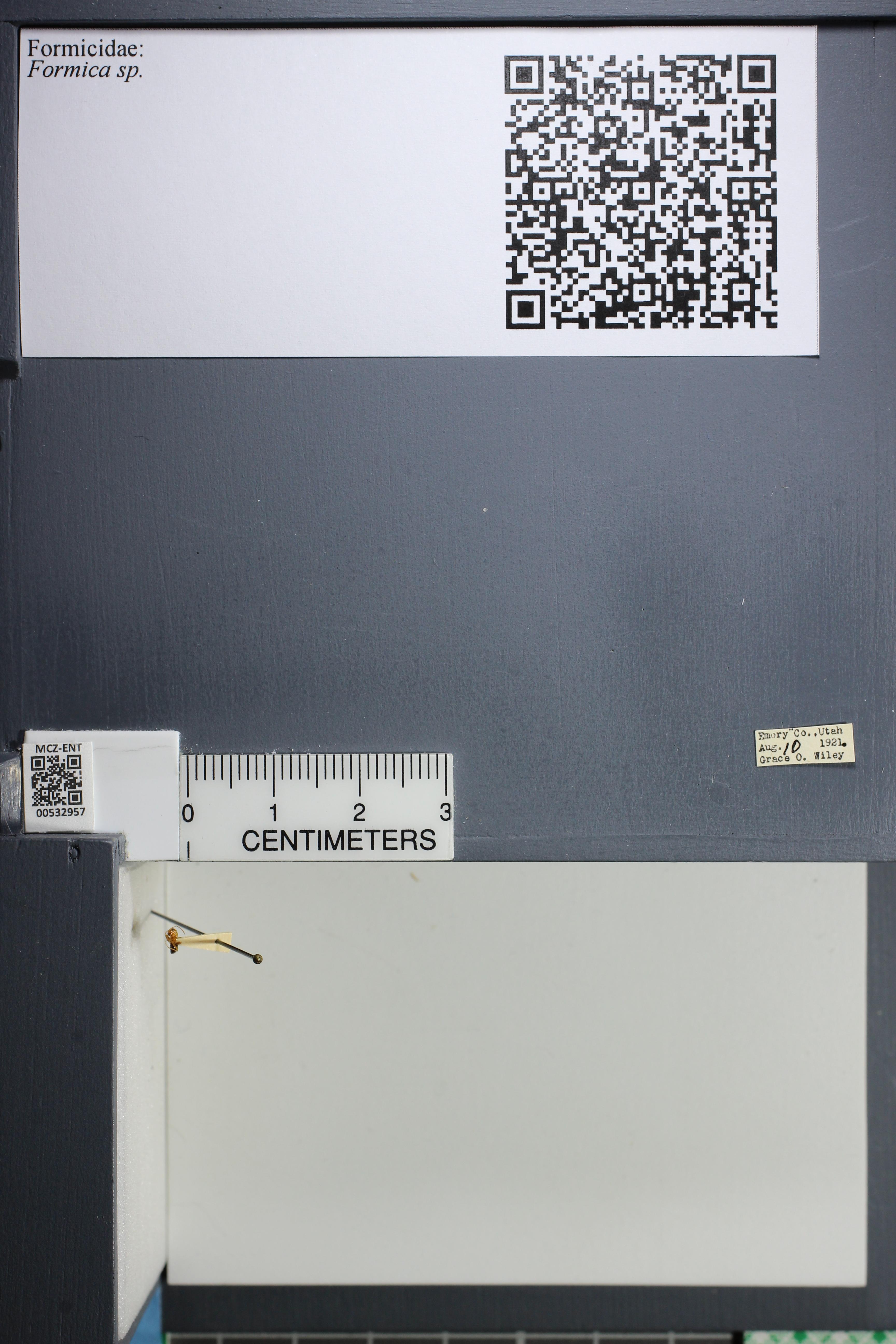 http://mczbase.mcz.harvard.edu/specimen_images/ent-formicidae/datashot/2014_09_08/IMG_304777.JPG