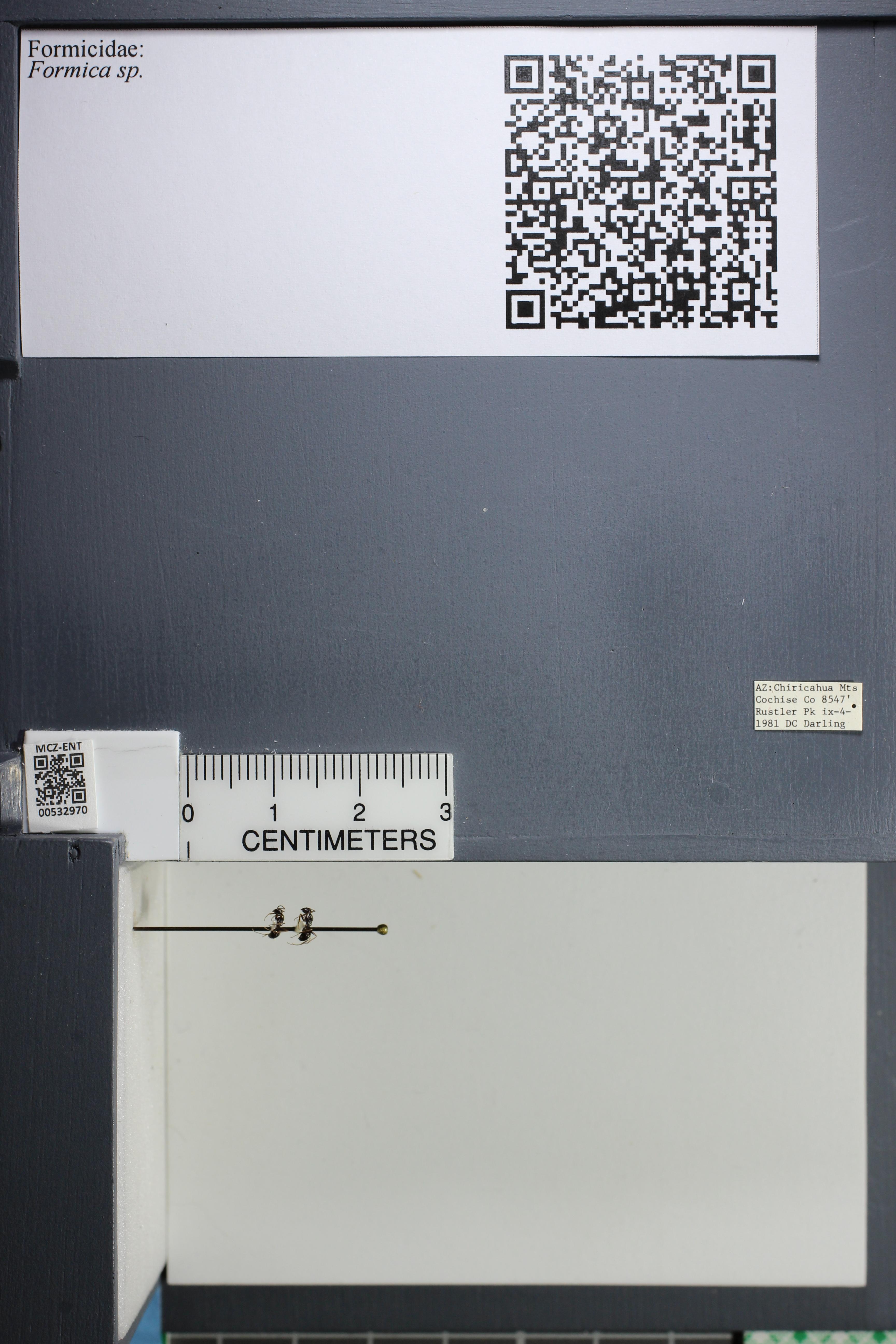 http://mczbase.mcz.harvard.edu/specimen_images/ent-formicidae/datashot/2014_09_08/IMG_304791.JPG
