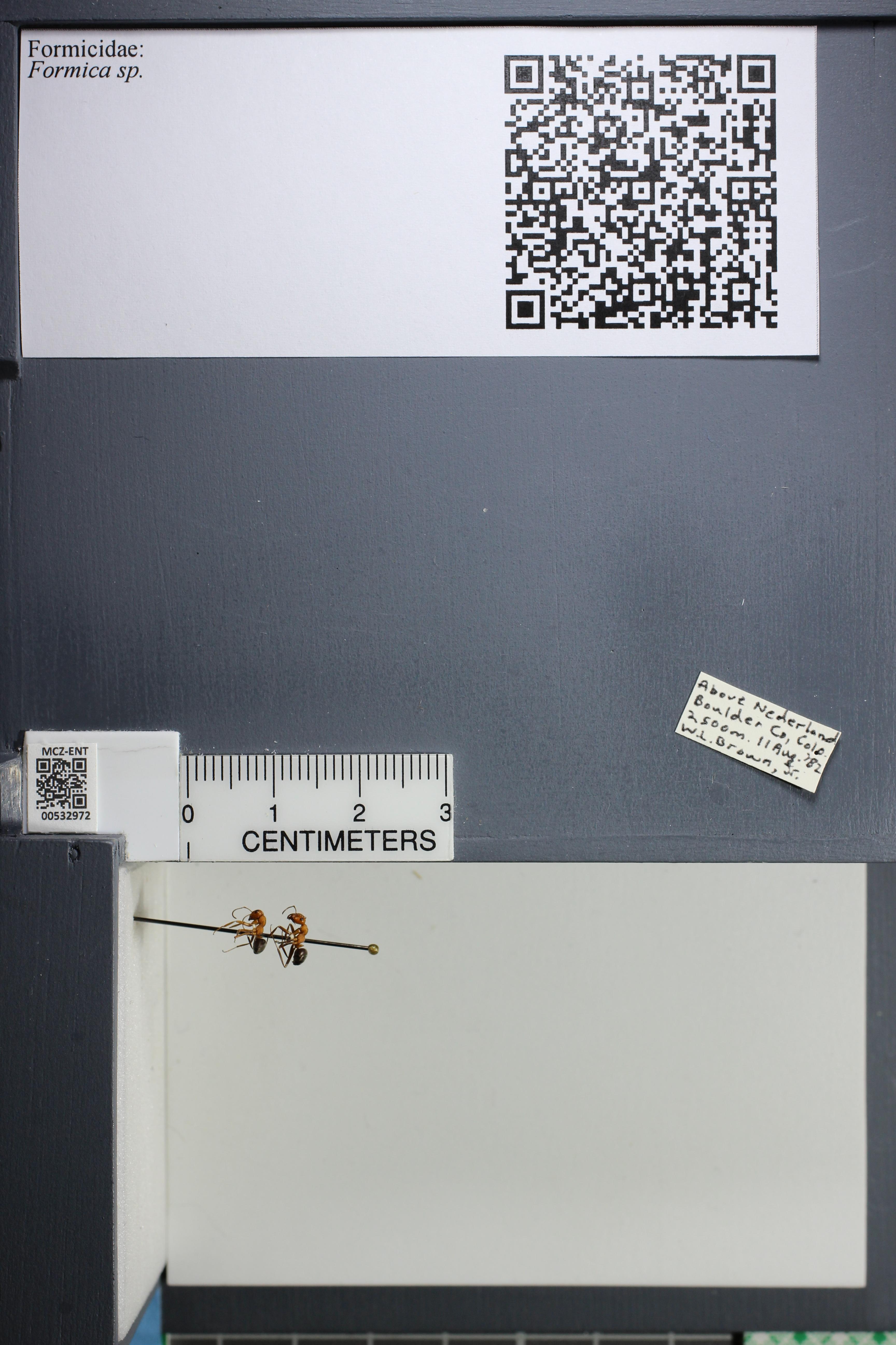 http://mczbase.mcz.harvard.edu/specimen_images/ent-formicidae/datashot/2014_09_08/IMG_304793.JPG