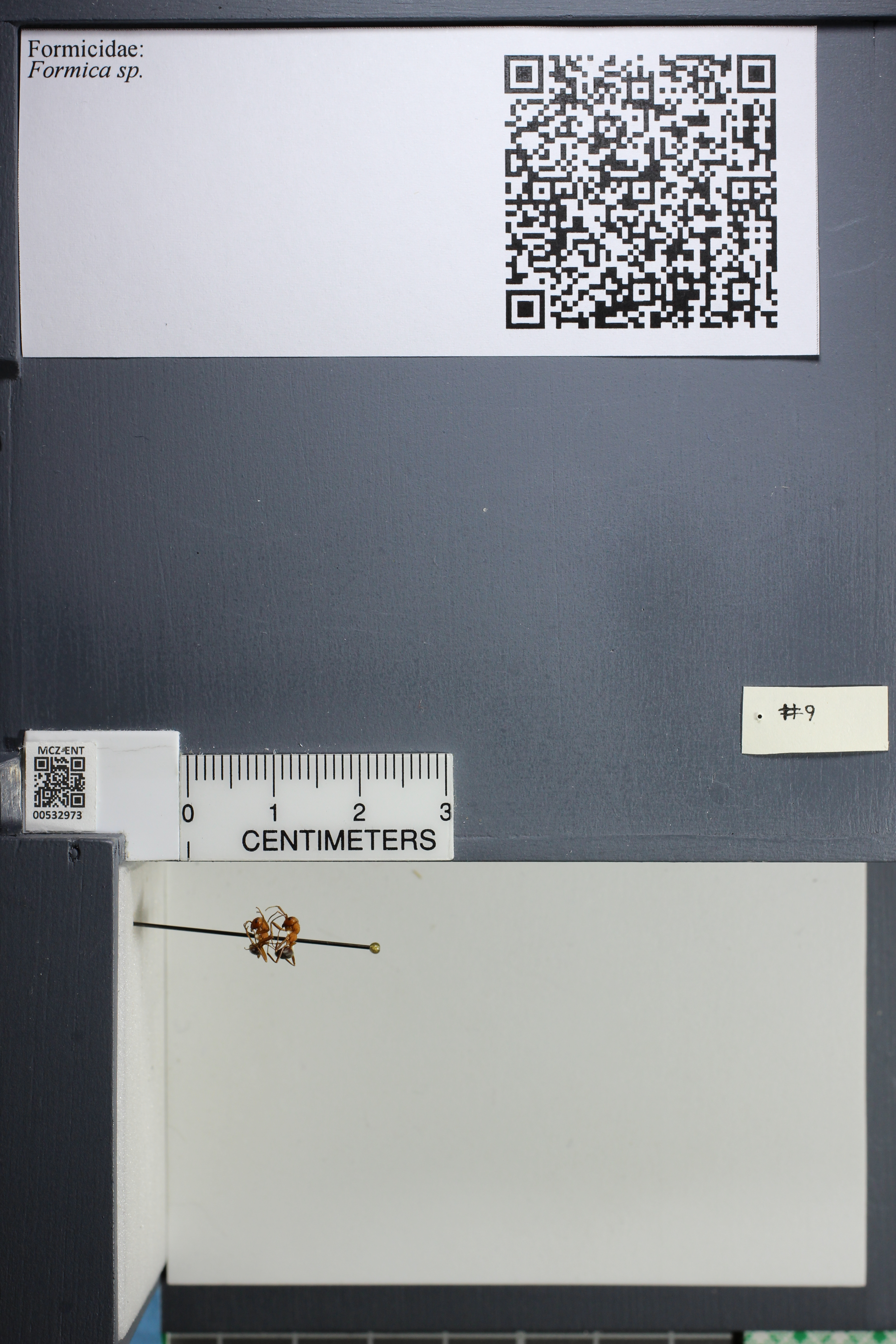 http://mczbase.mcz.harvard.edu/specimen_images/ent-formicidae/datashot/2014_09_08/IMG_304798.JPG
