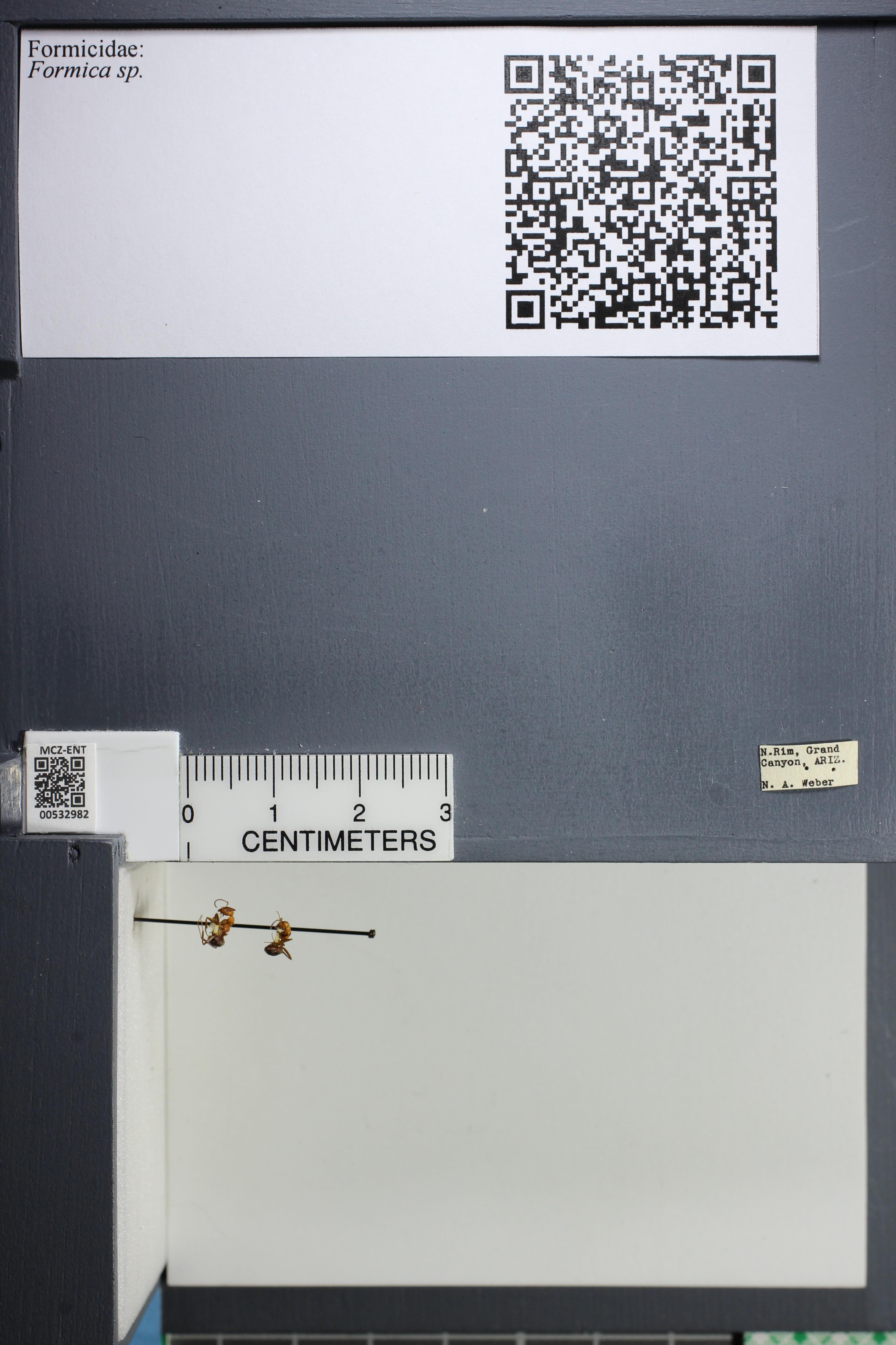 http://mczbase.mcz.harvard.edu/specimen_images/ent-formicidae/datashot/2014_09_09/IMG_304810.JPG