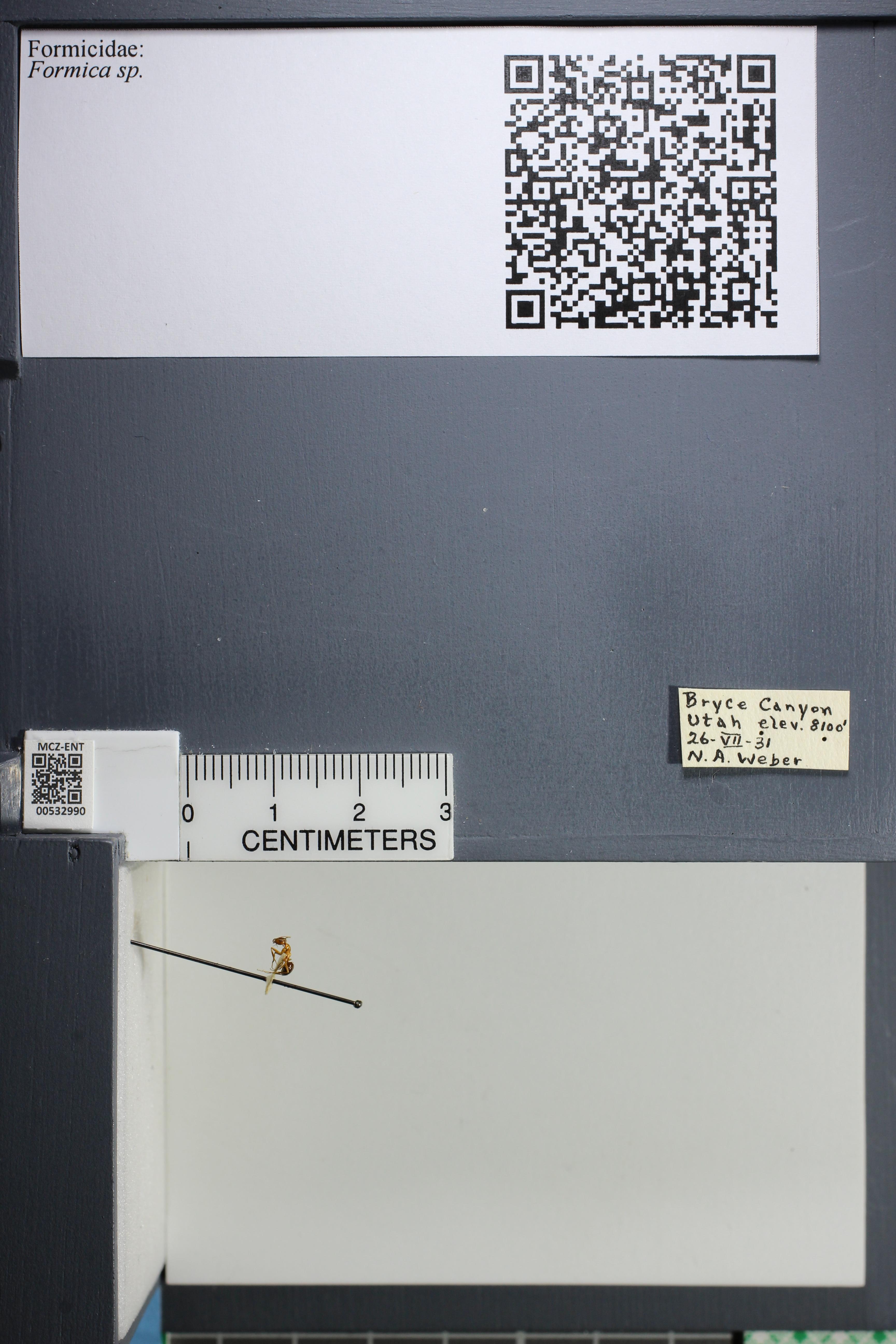 http://mczbase.mcz.harvard.edu/specimen_images/ent-formicidae/datashot/2014_09_09/IMG_304818.JPG