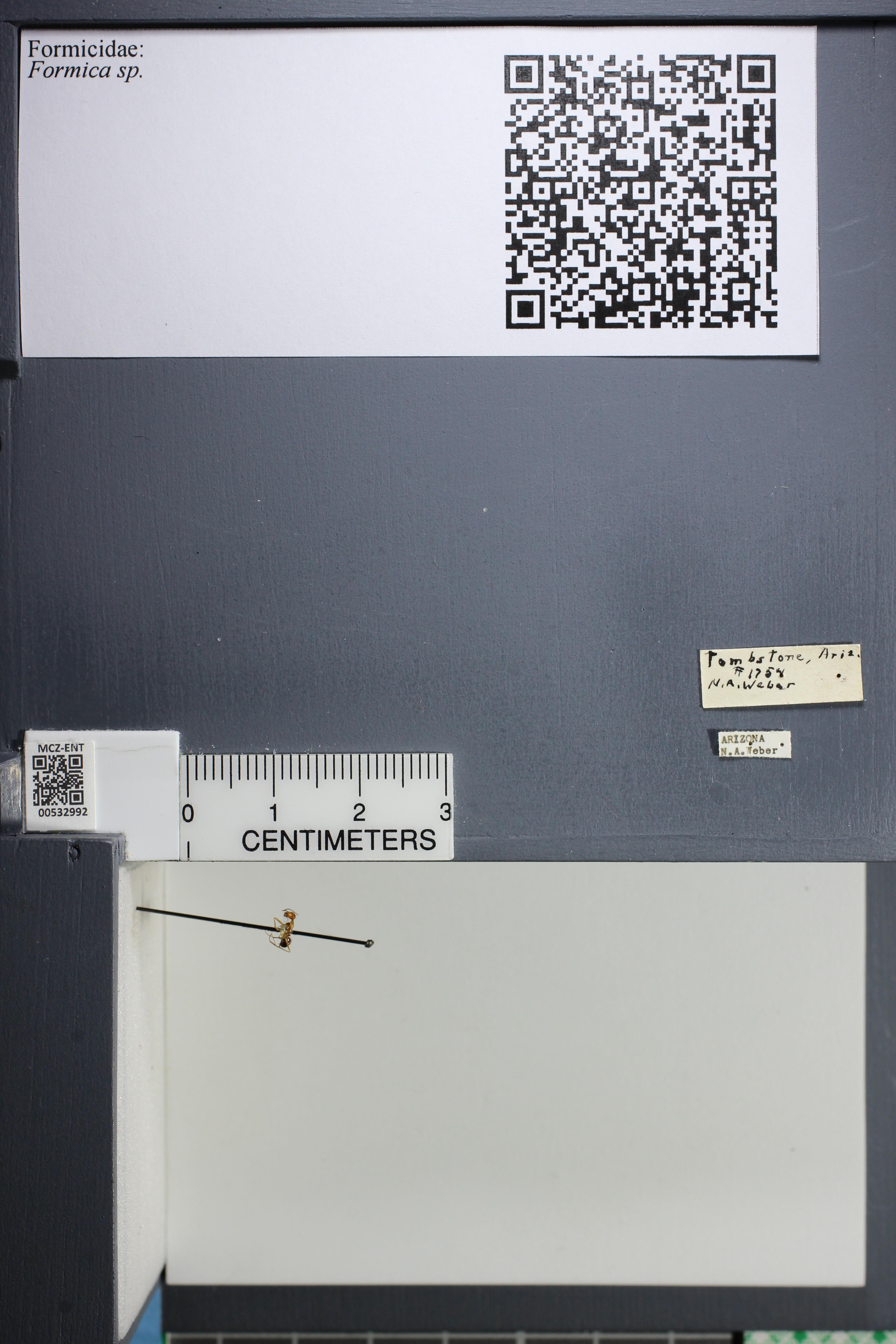 http://mczbase.mcz.harvard.edu/specimen_images/ent-formicidae/datashot/2014_09_09/IMG_304821.JPG