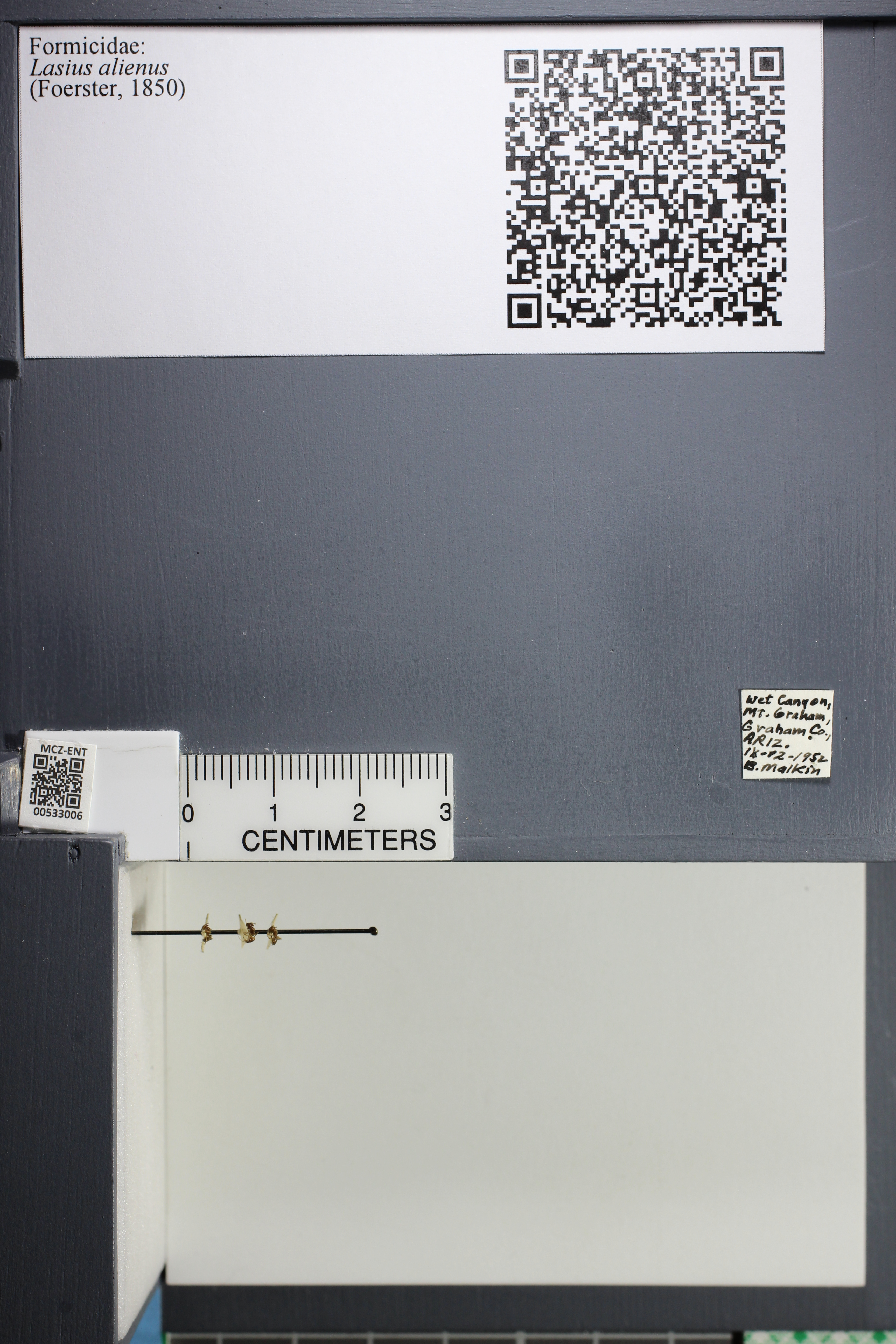 http://mczbase.mcz.harvard.edu/specimen_images/ent-formicidae/datashot/2014_09_09/IMG_304838.JPG